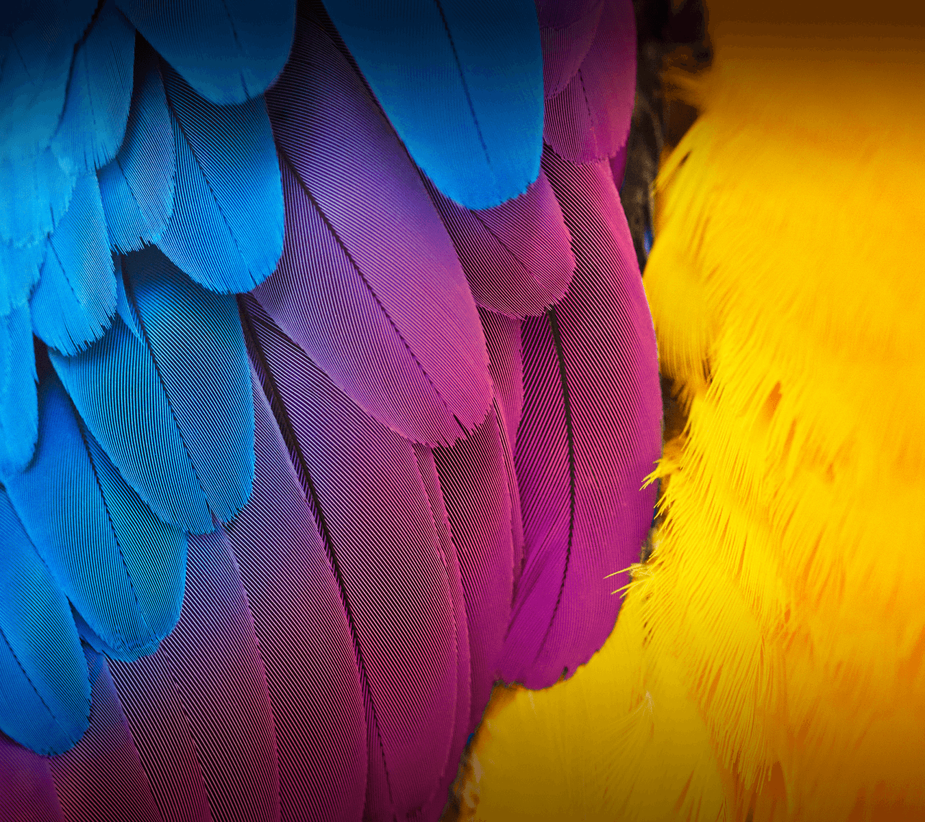TechDroider: wallpaper