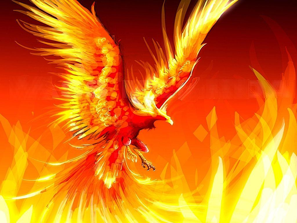 Fire Eagle Wallpapers Wallpaper Cave