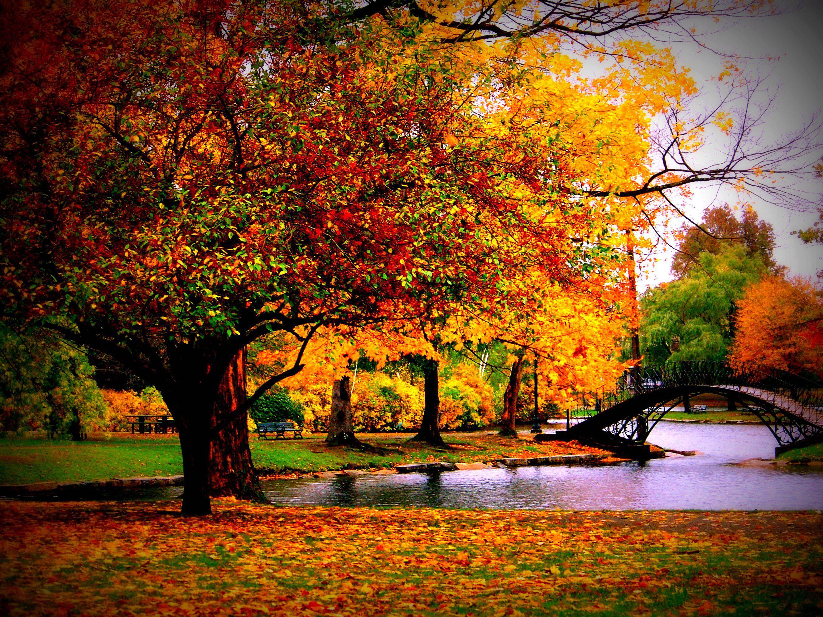 autumn season - photo #10
