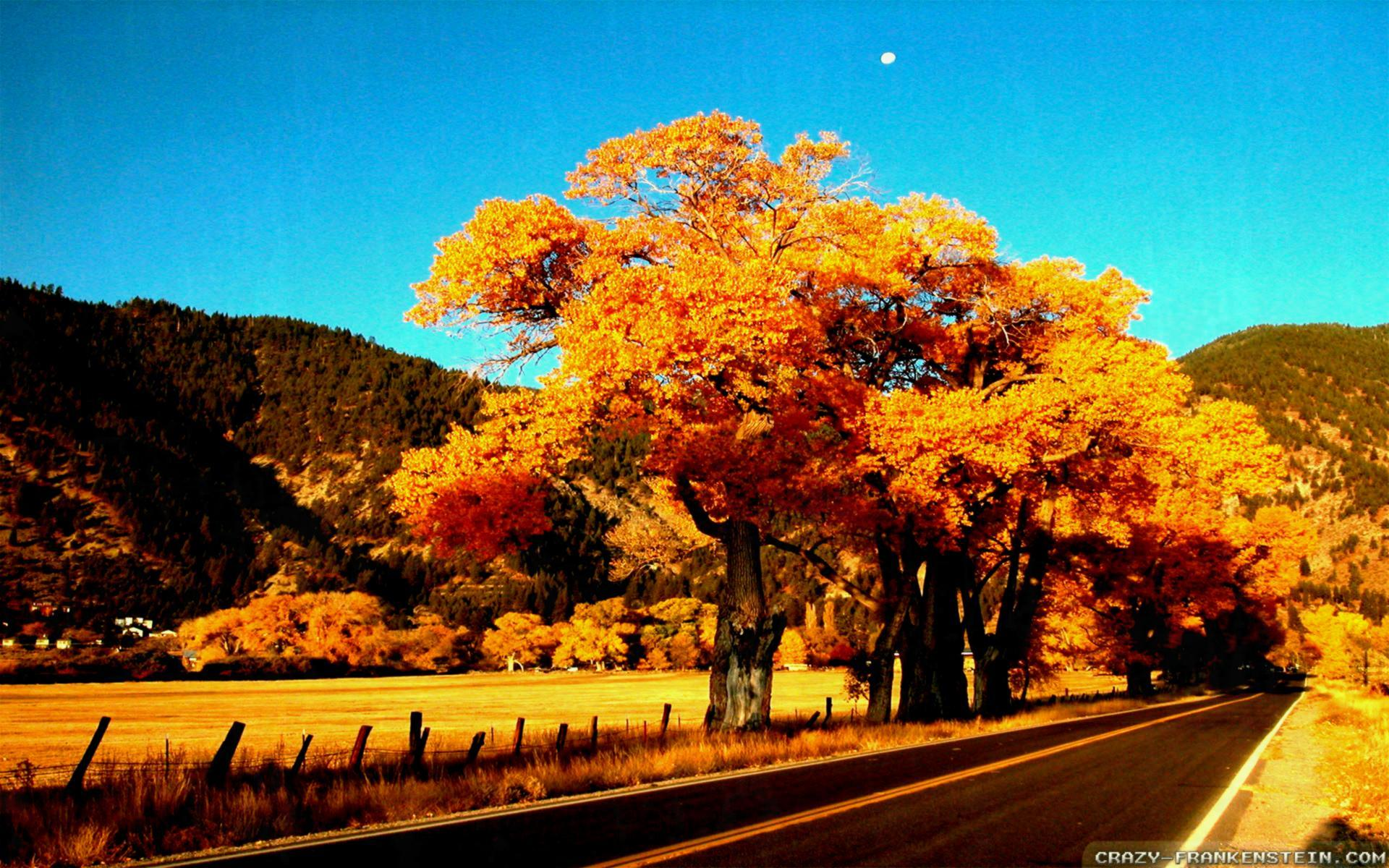 Fall Season Wallpapers Crazy Trees X - Bedroom Romantic Features ...