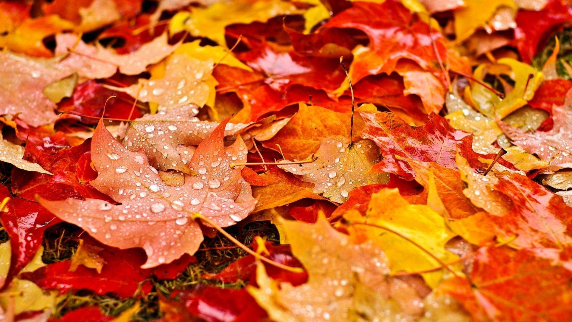Fall Leaves Wallpapers Hd Resolution | Natures Wallpapers ...