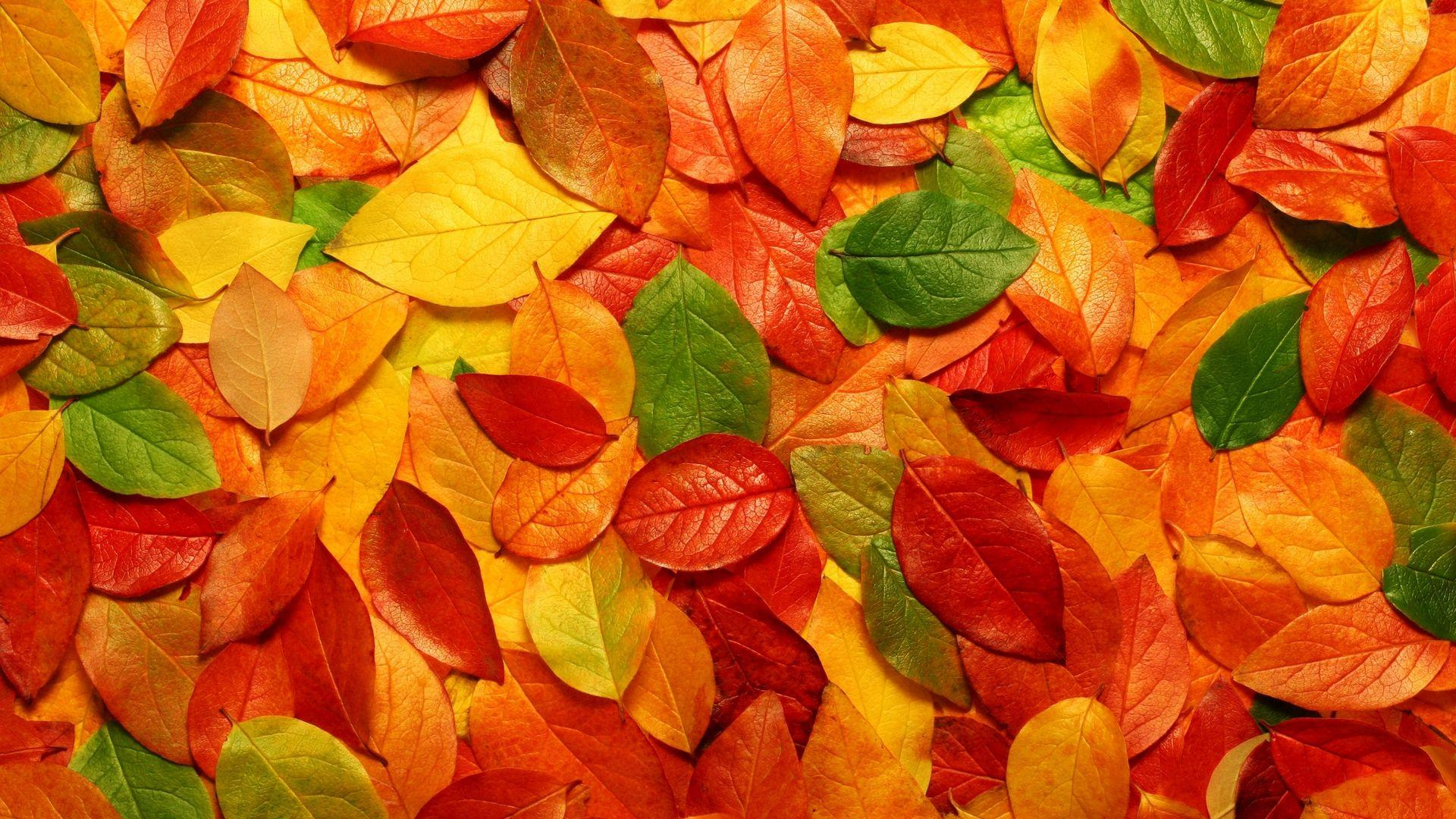 Autumn Leaves HD Wallpaper - Wallpaper Stream