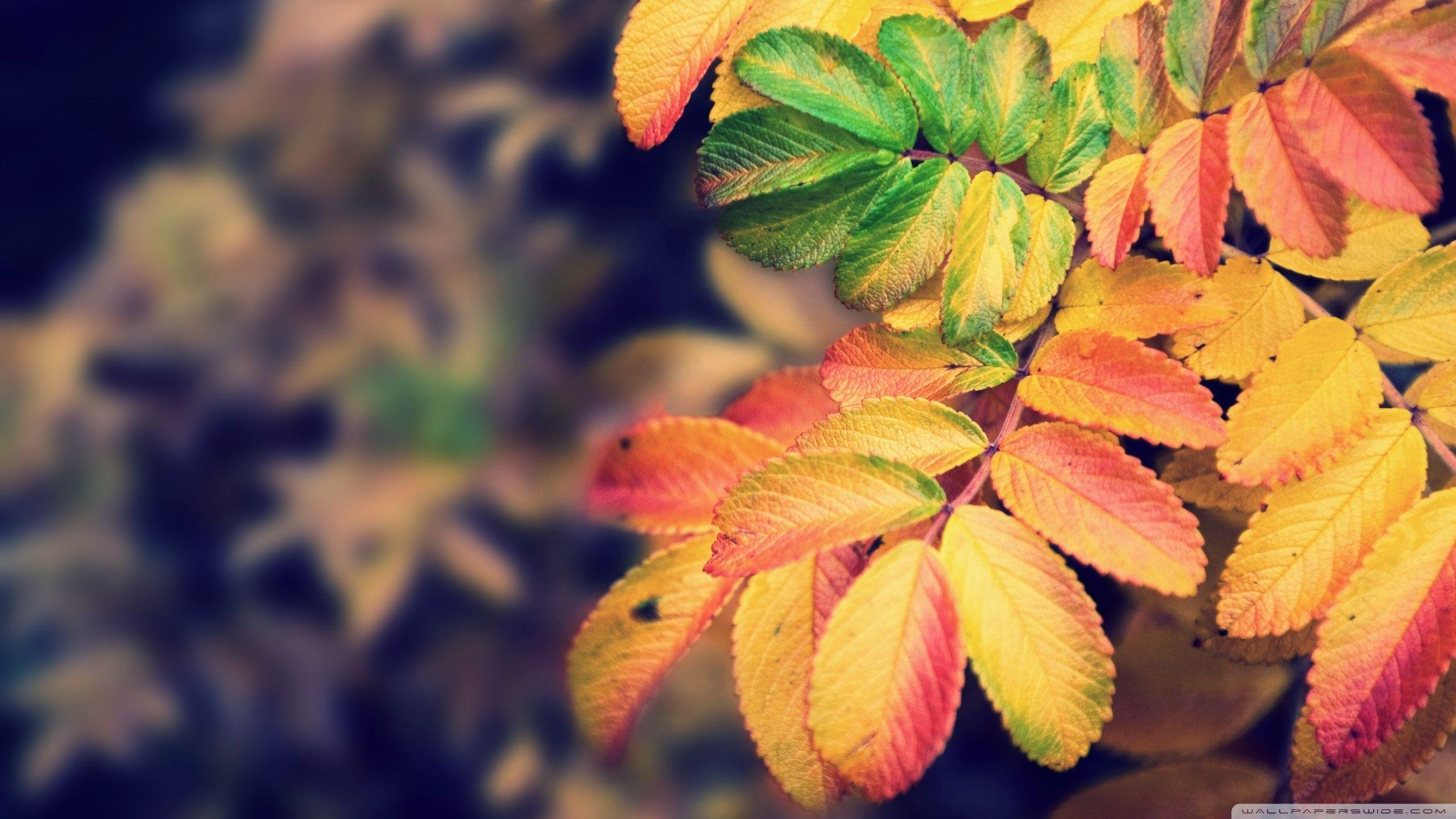 Autumn Leaves ❤ 4K HD Desktop Wallpaper for 4K Ultra HD TV • Tablet ...