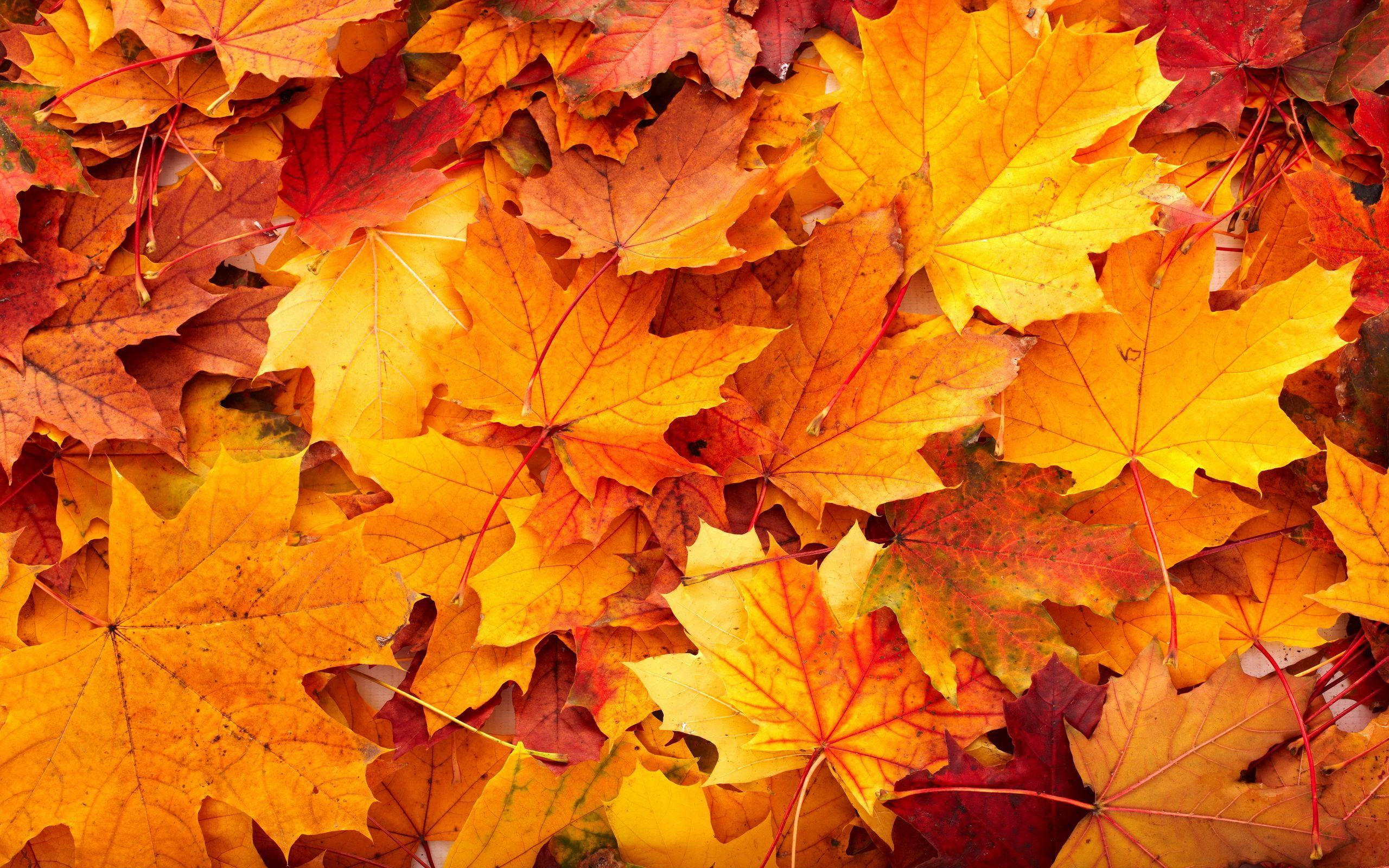 Fall Leaf Backgrounds Group (43+)