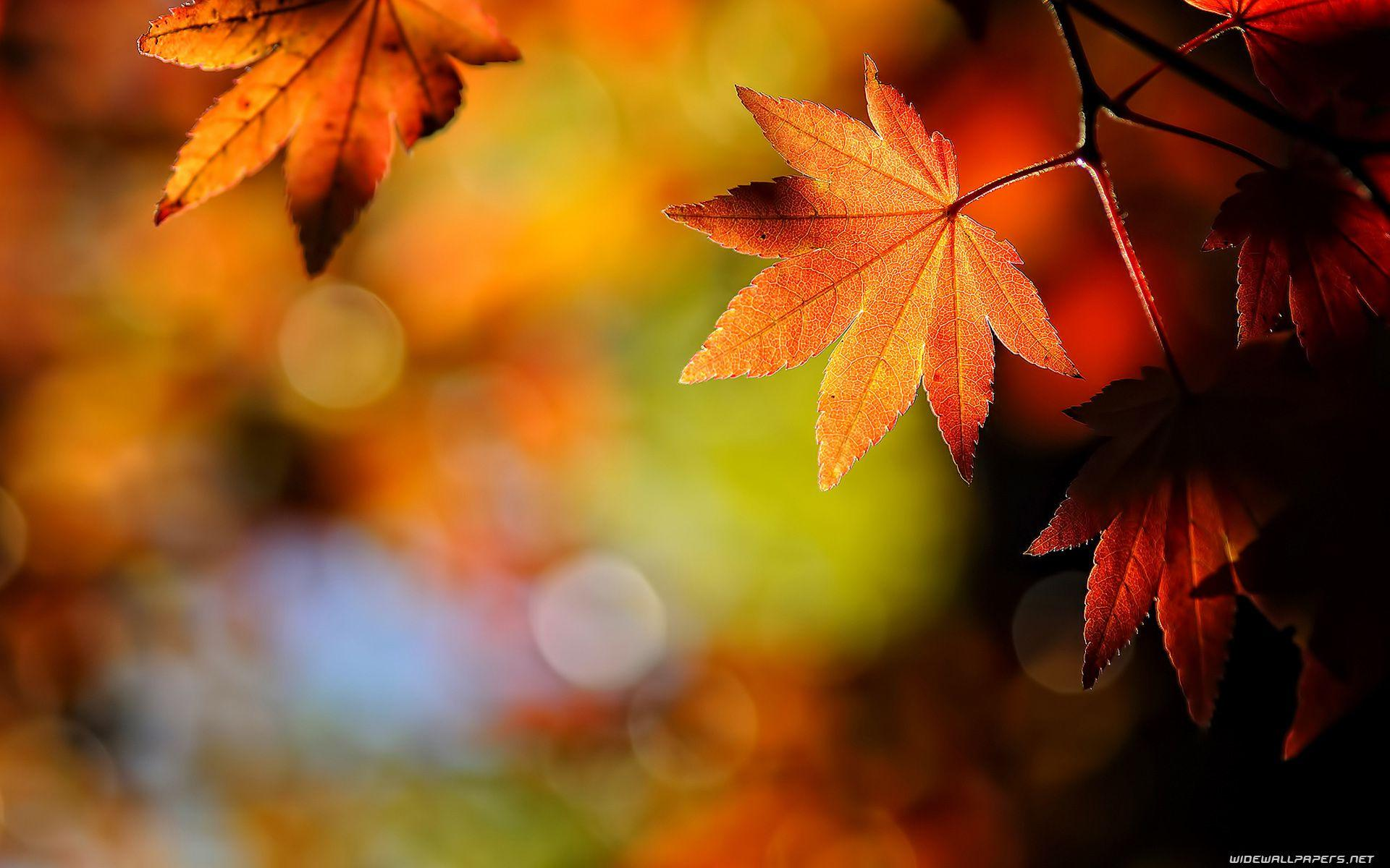 Fall Leaves Wallpaper - QyGjxZ