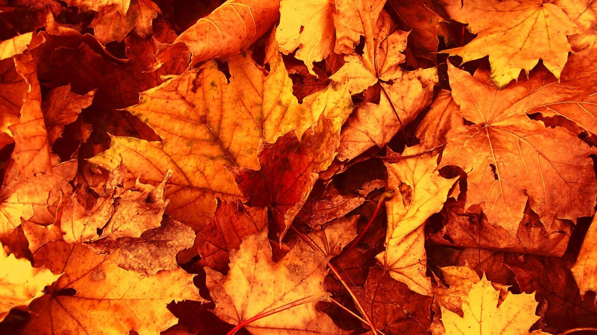 Autumn Leaves Wallpaper | HD Wallpapers Pulse
