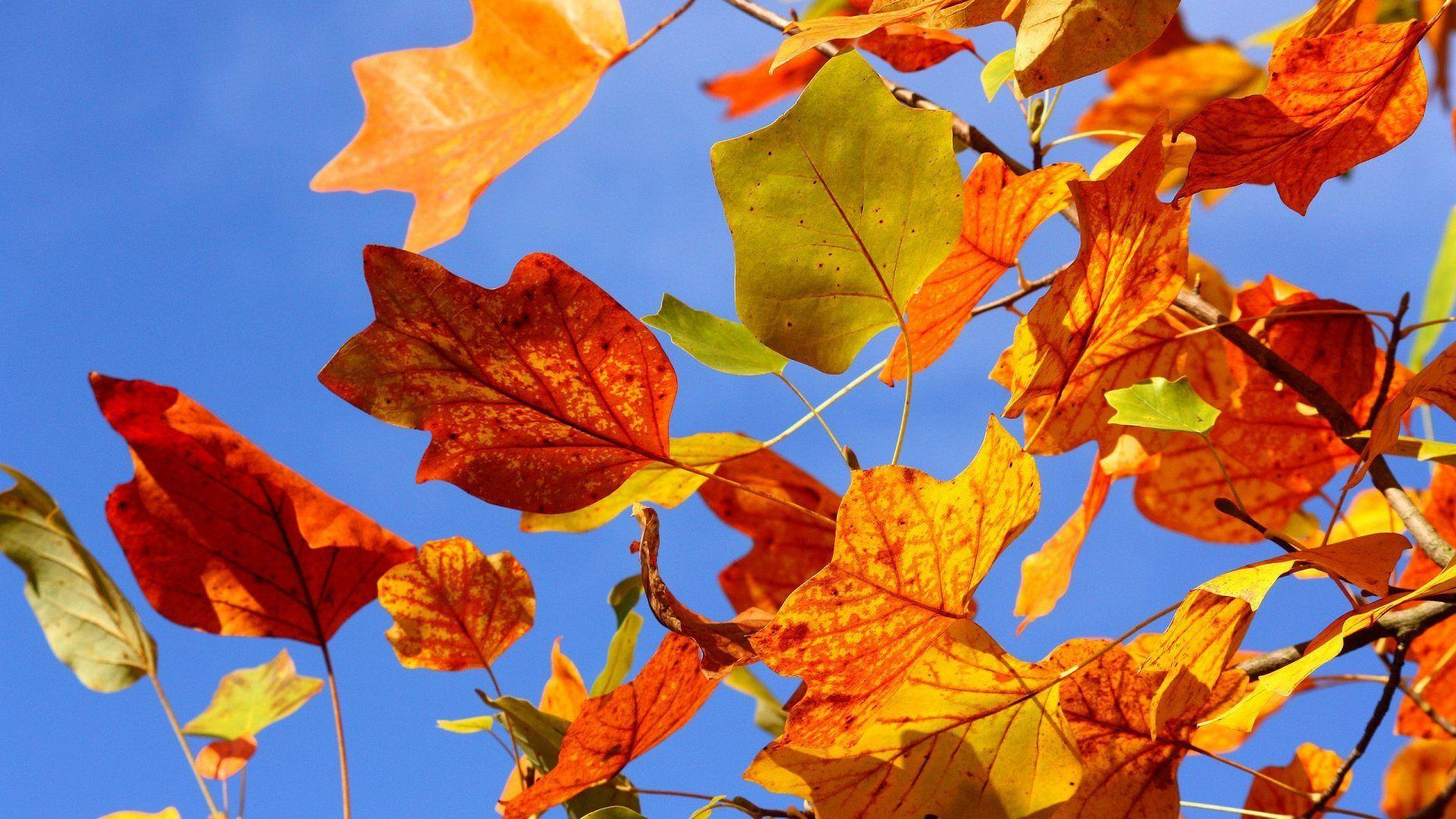 Fall Leaves Desktop Wallpaper - Widescreen HD Wallpapers | Leaves ...