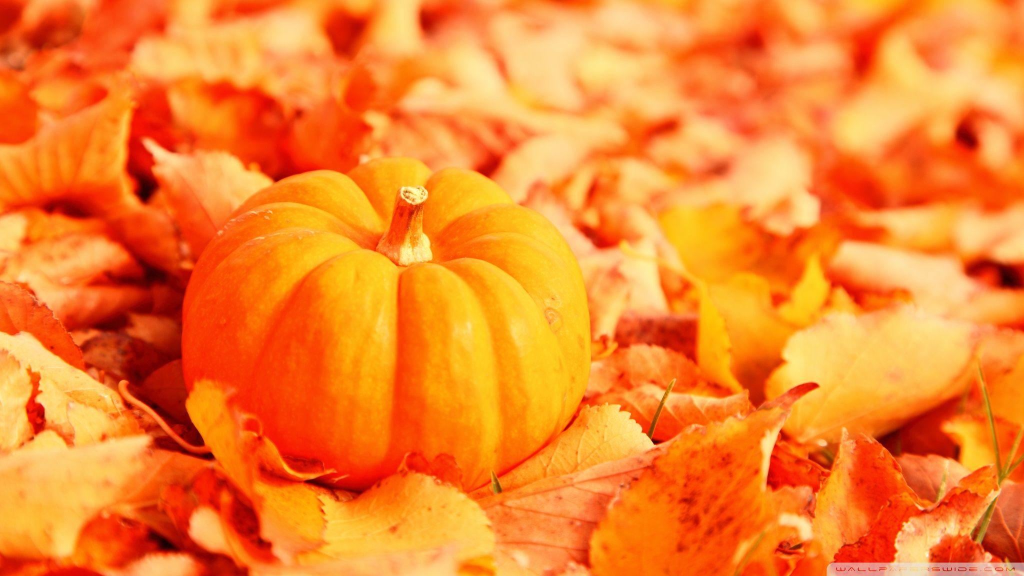 Pumpkin And Autumn Leaves ❤ 4K HD Desktop Wallpaper for 4K Ultra HD ...