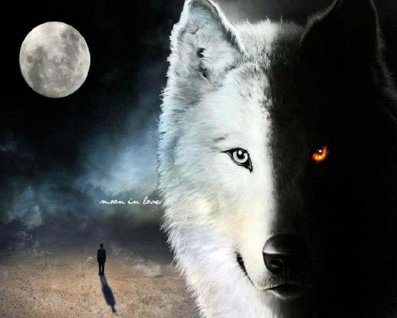White Wolf And Black Wolf Wallpapers Wallpaper Cave