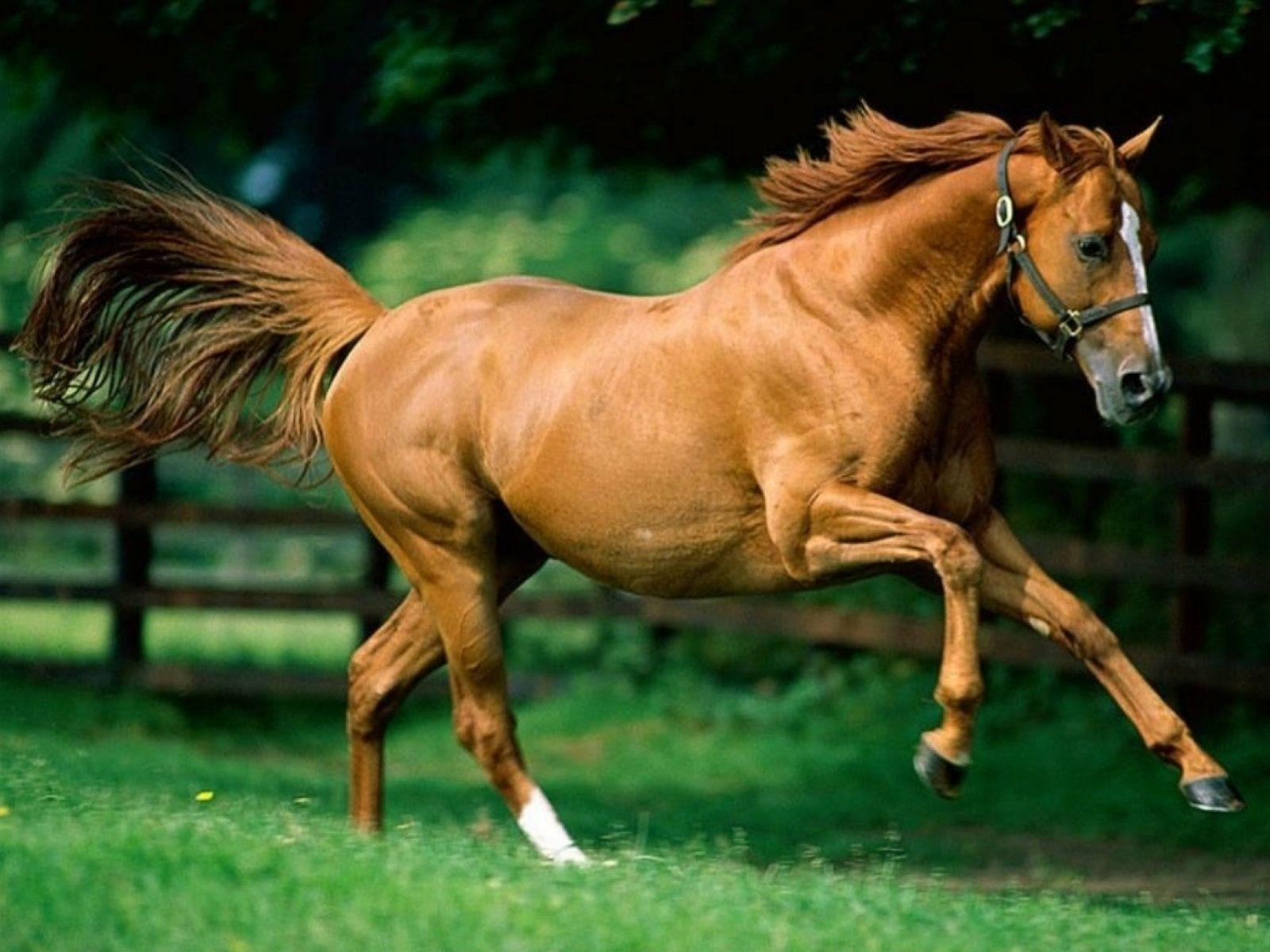Brown Horse Wallpapers Wallpaper Cave