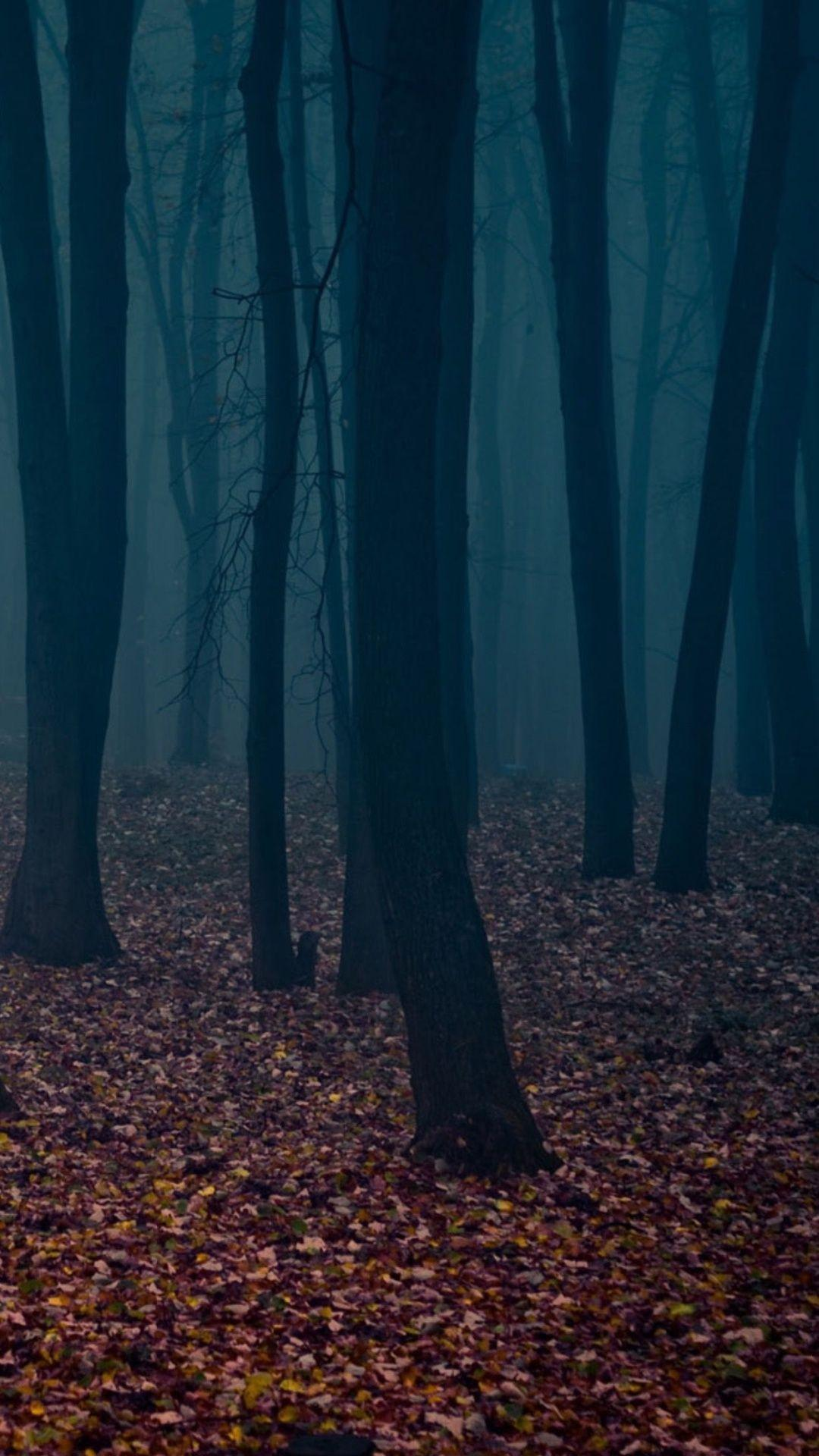 Spooky Autumn Forest Leafbed iPhone 6 Plus HD Wallpapers