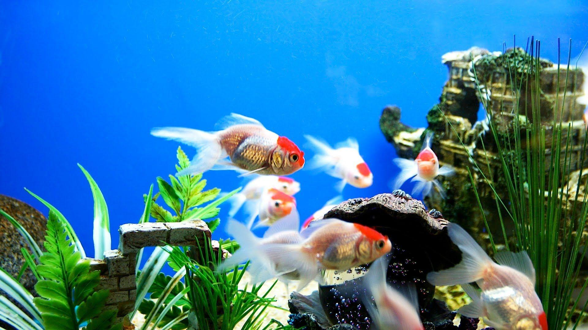 Aquarium Fish Wallpapers - Wallpaper Cave