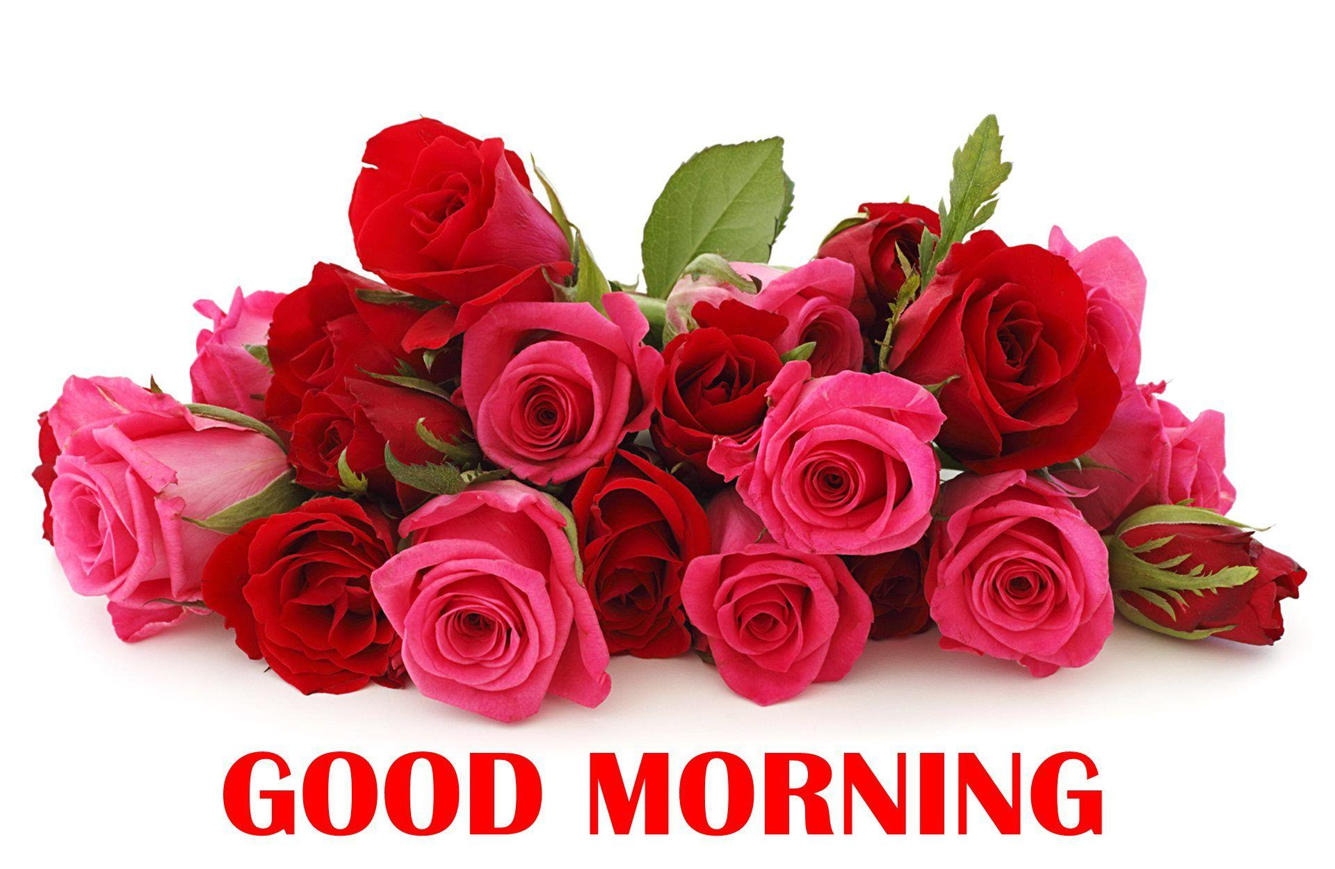 Good Morning Rose Wallpapers Wallpaper Cave