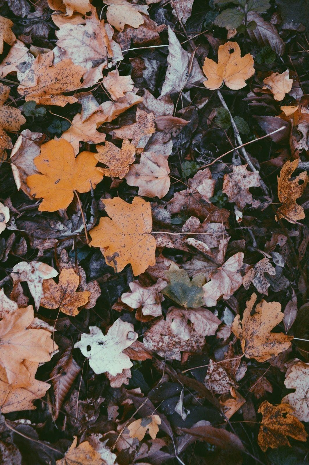 Autumn Aesthetic Wallpapers Wallpaper Cave