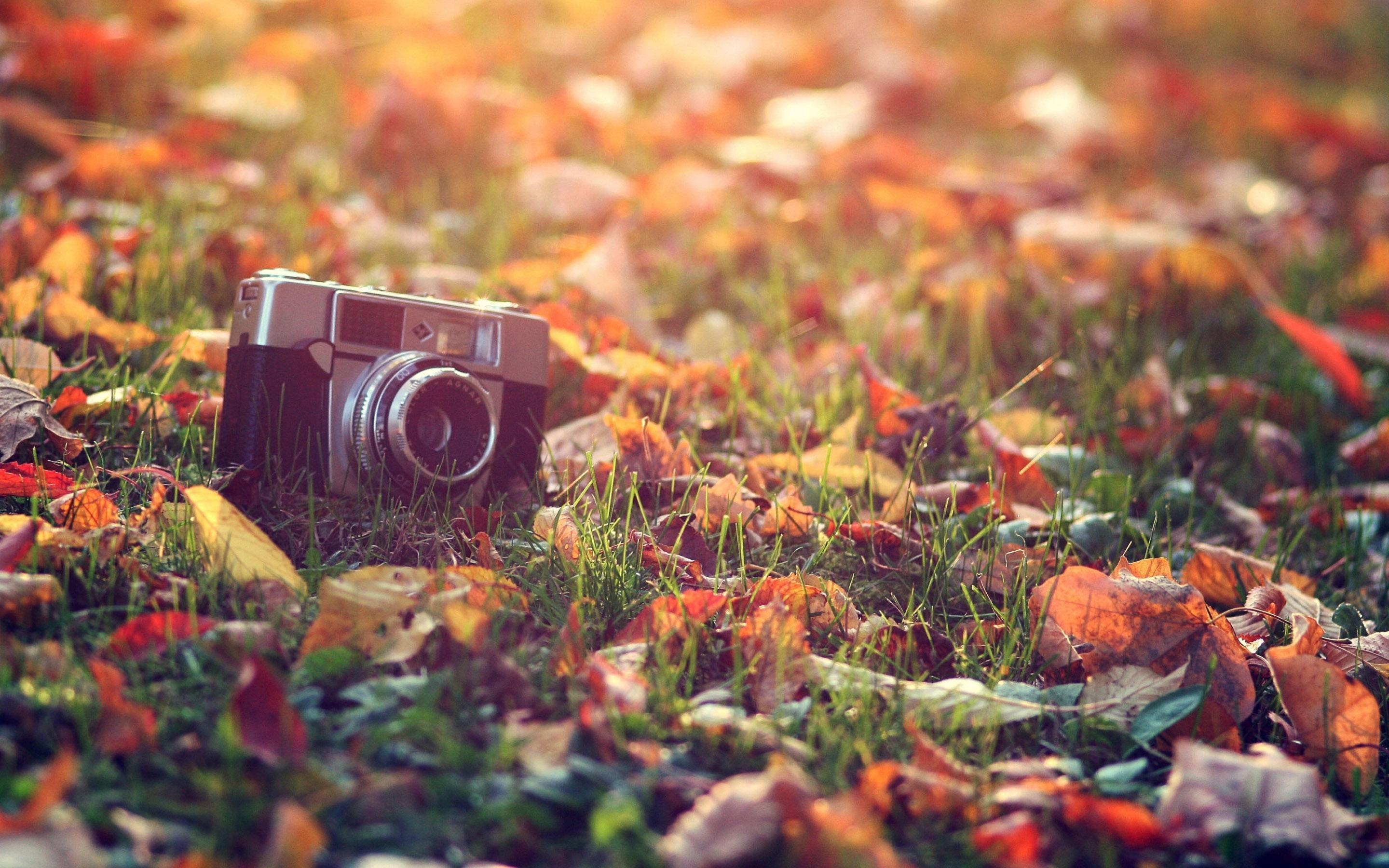 Aesthetic Autumn Wallpapers Wallpaper Cave