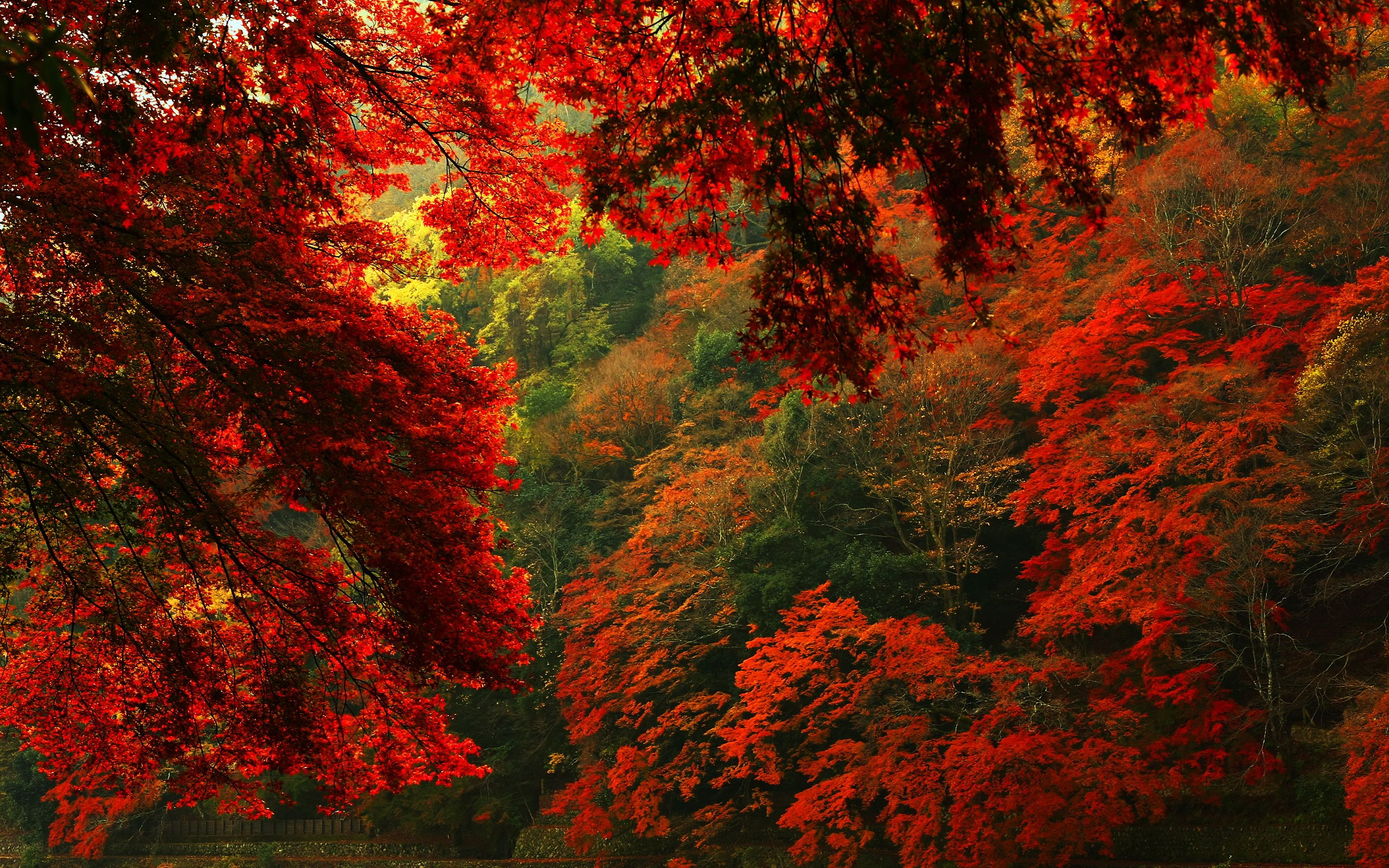 Aesthetic Autumn Wallpapers - Wallpaper Cave