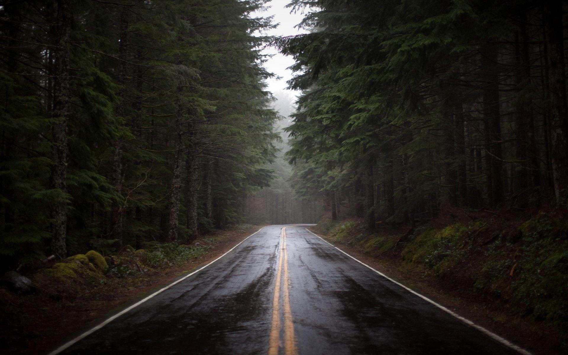 Rain Forest Road Wallpapers Wallpaper Cave