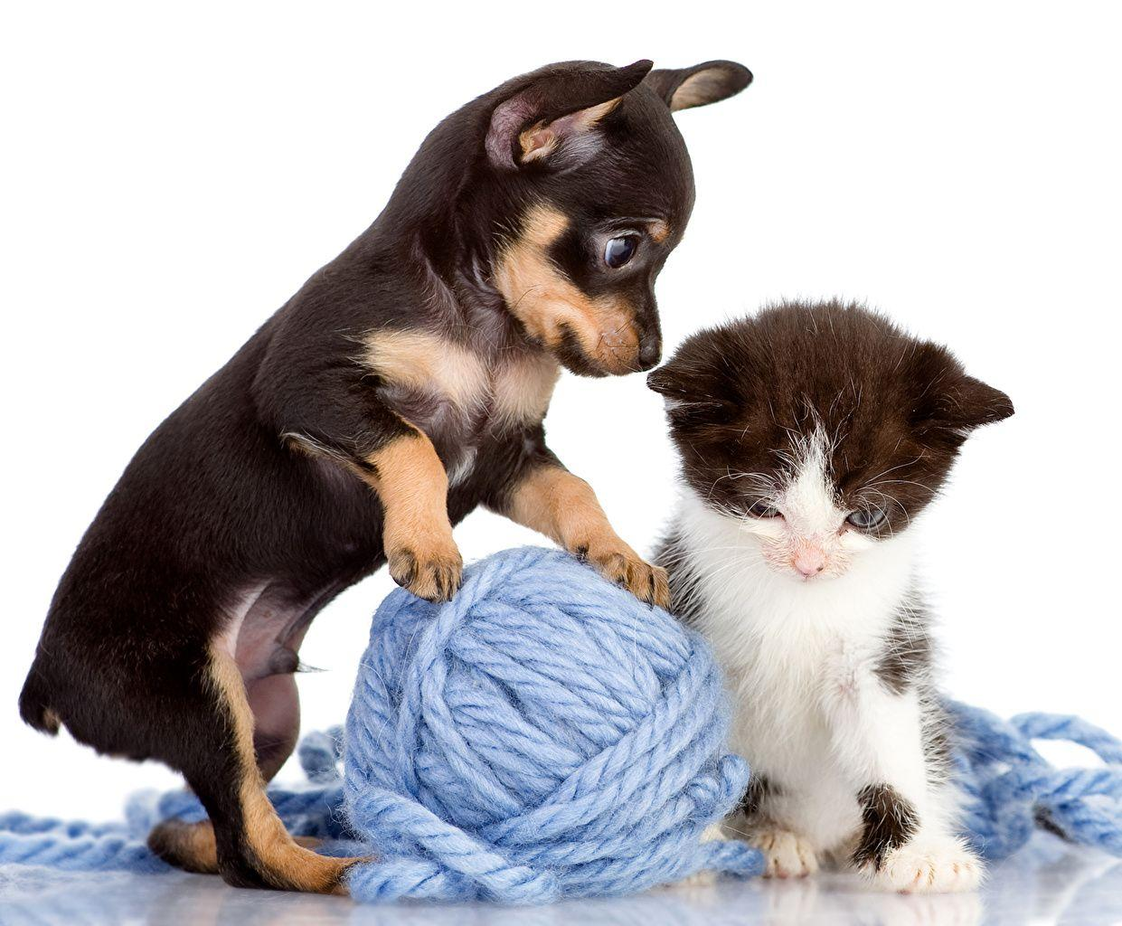 Марта, смешные картинки щенков и котят