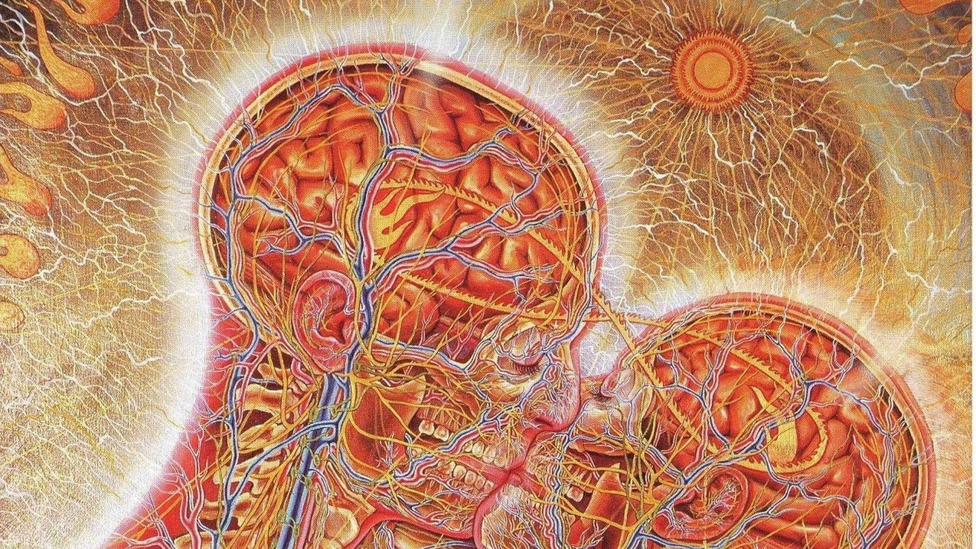 Human Anatomy Wallpapers - Wallpaper Cave