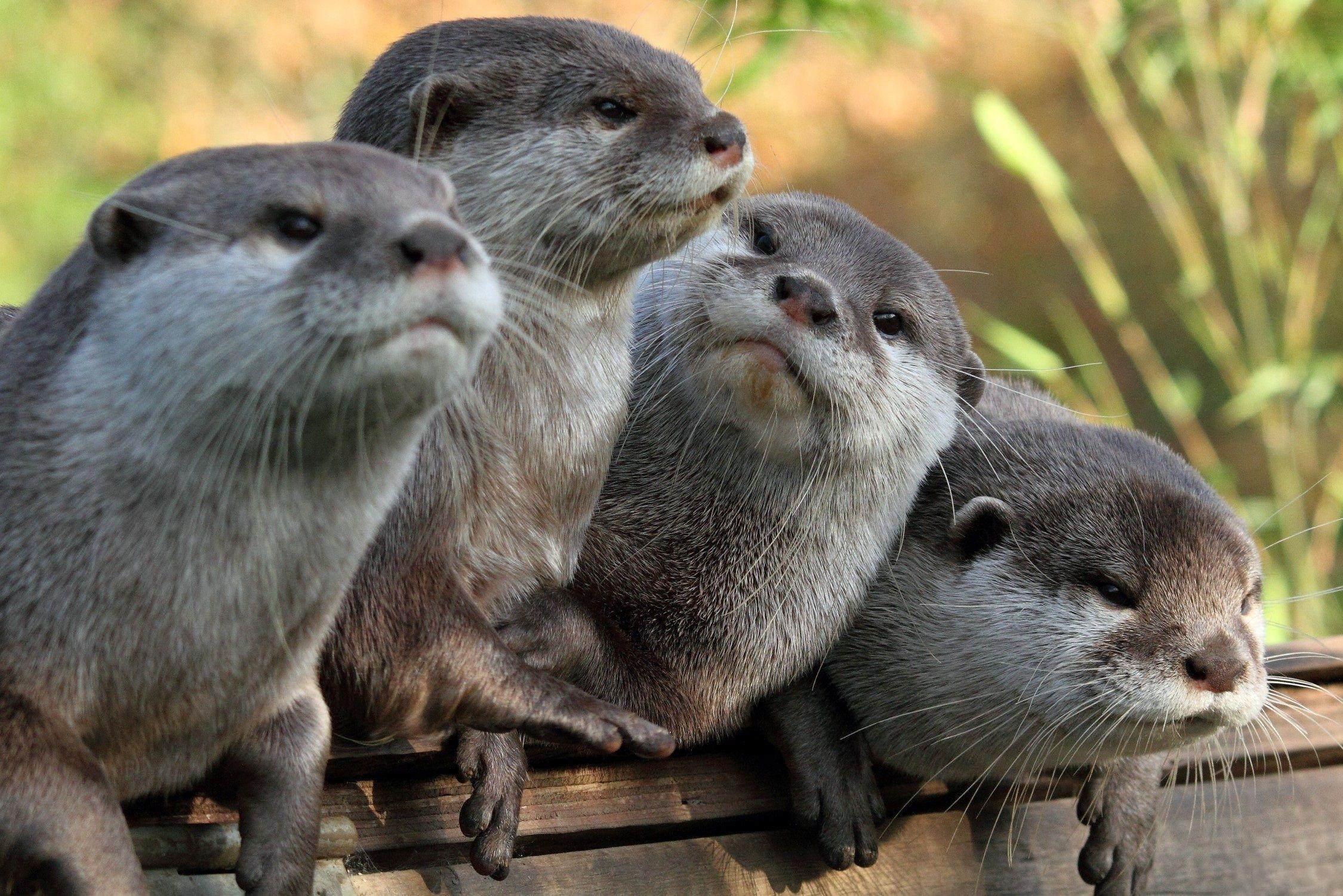 Cute Otter Wallpapers Wallpaper Cave