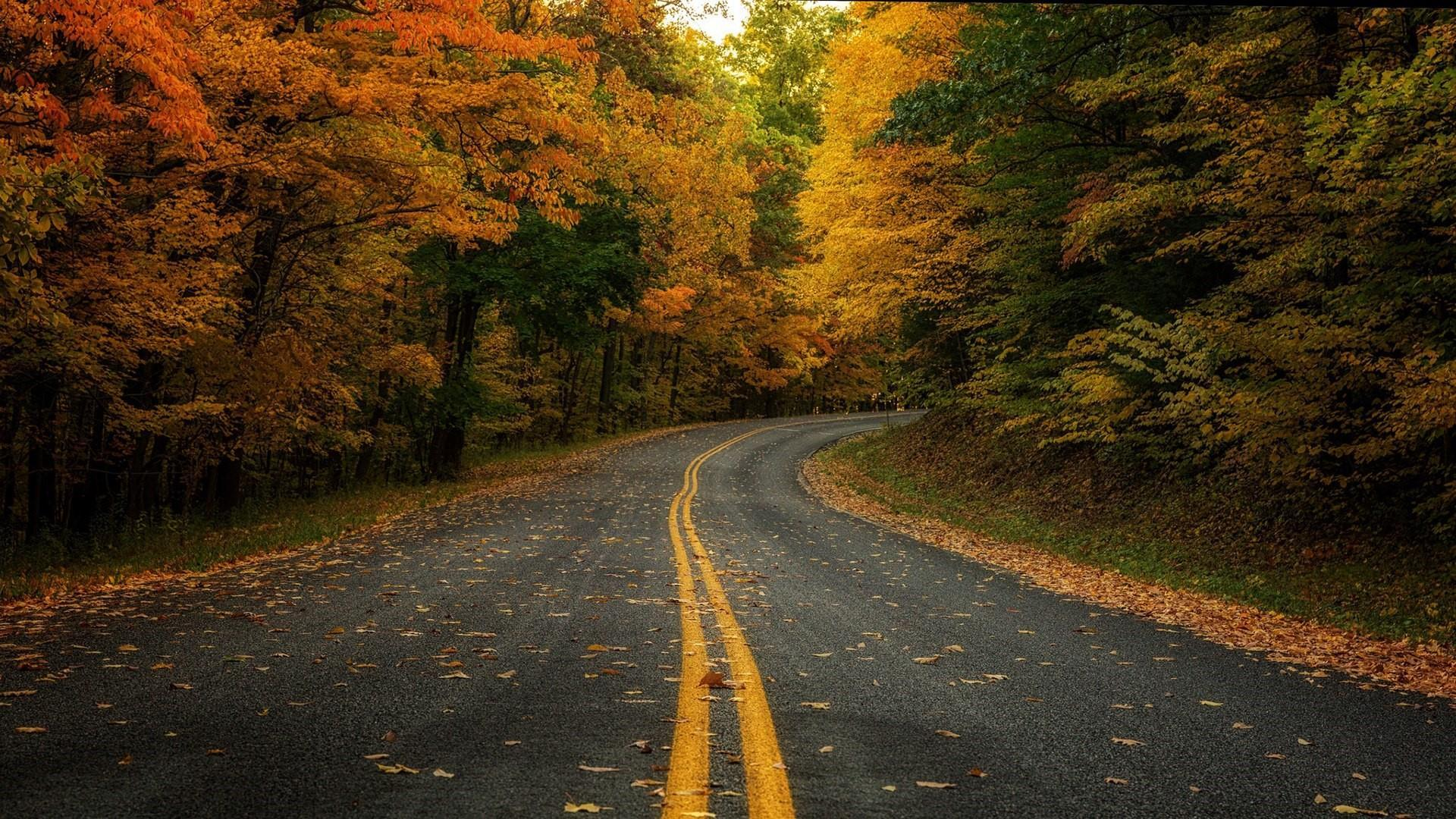 Forest Road Wallpapers Wallpaper Cave