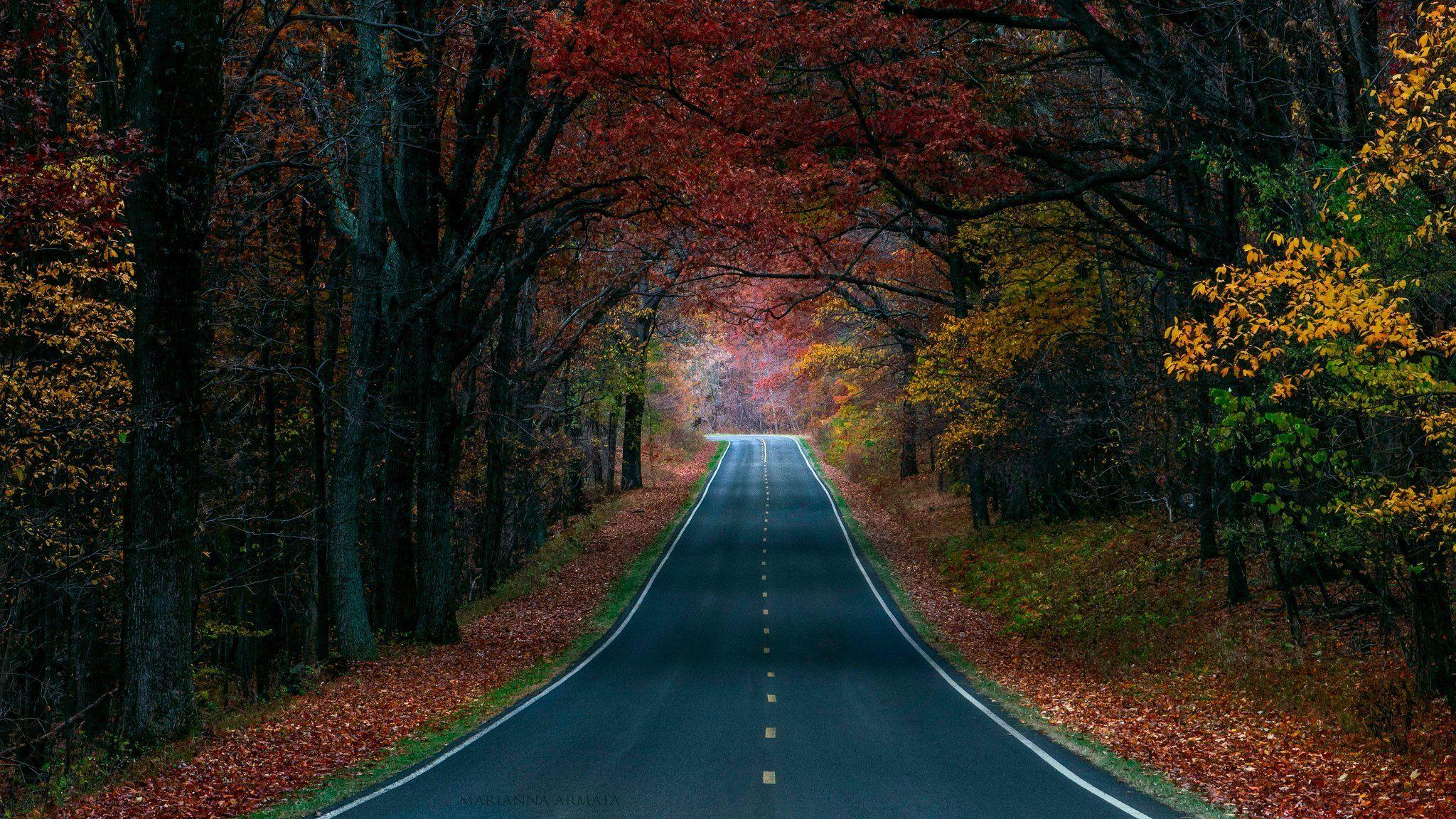 Autumn Road Wallpapers 14