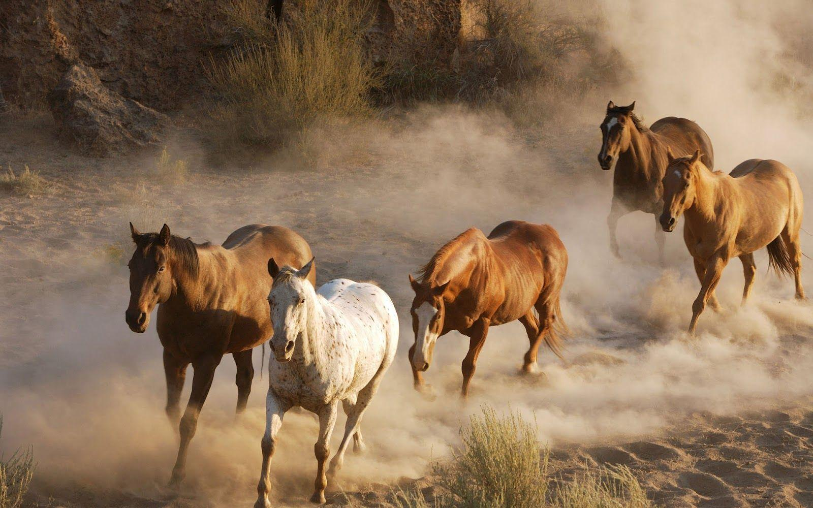 Running Horse Wallpapers Wallpaper Cave