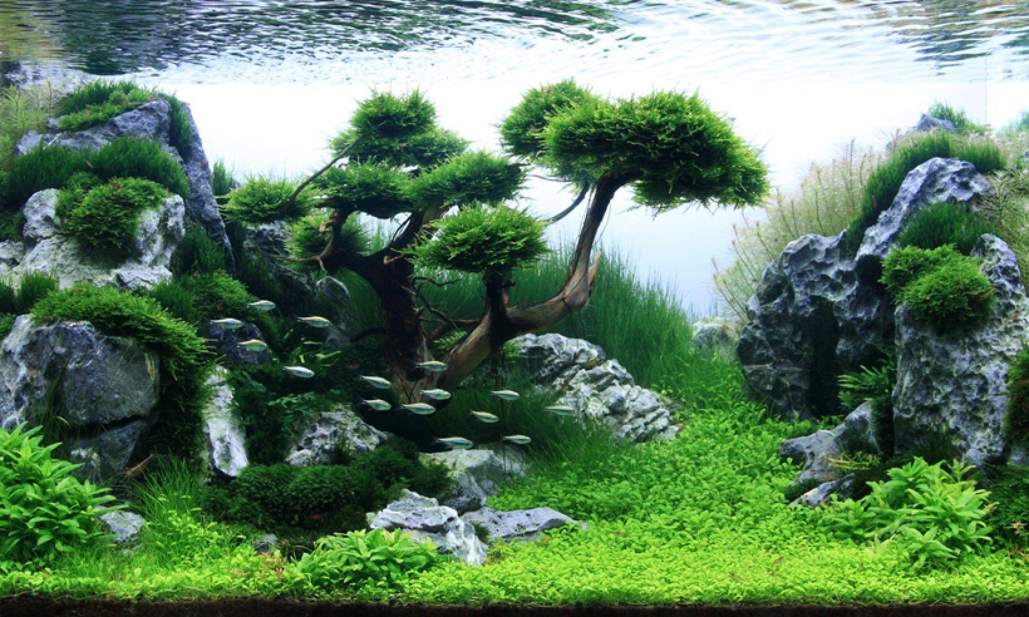 Aquascape Ideas | Bruin Blog