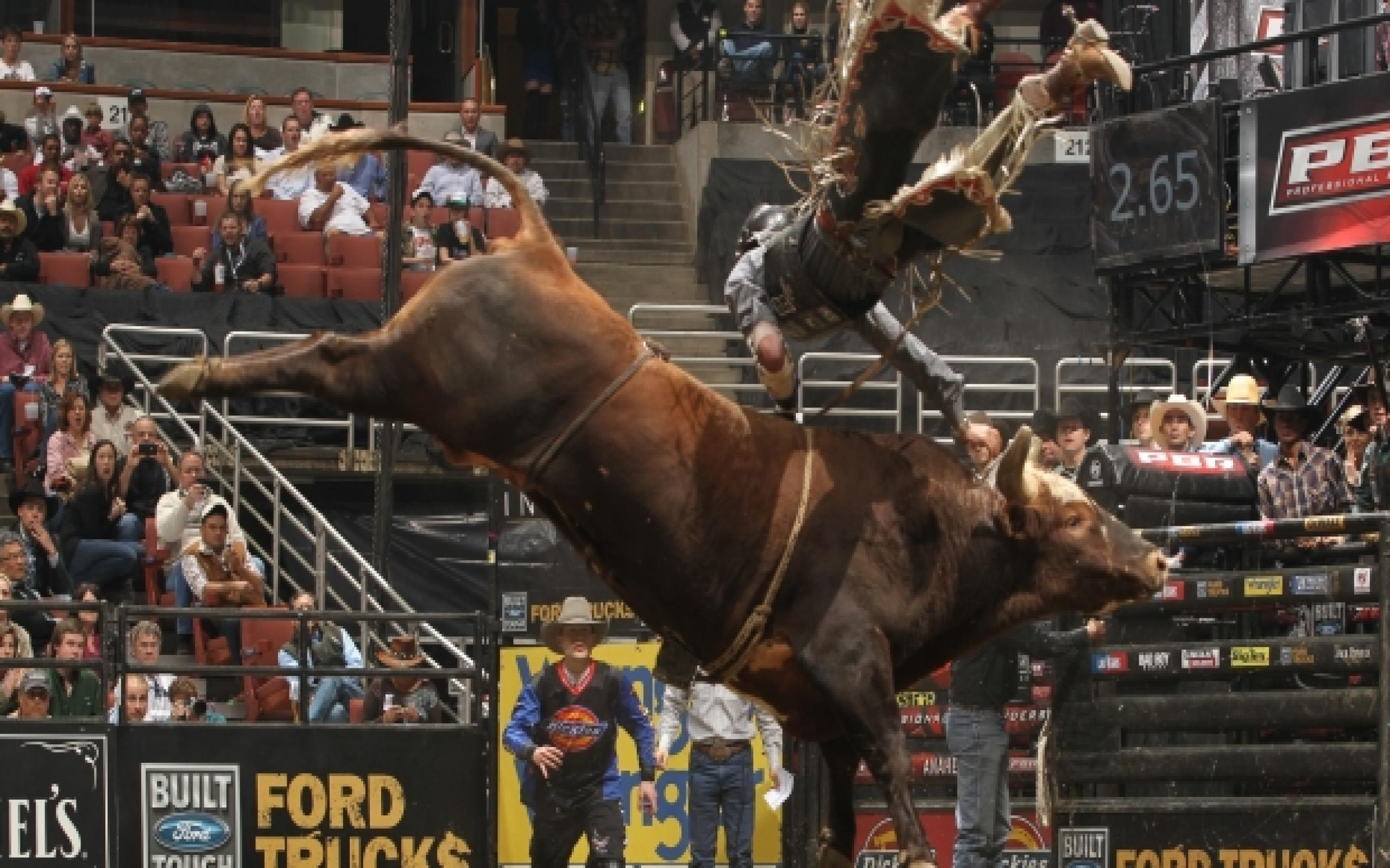 Bull Riding Wallpapers Wallpaper Cave
