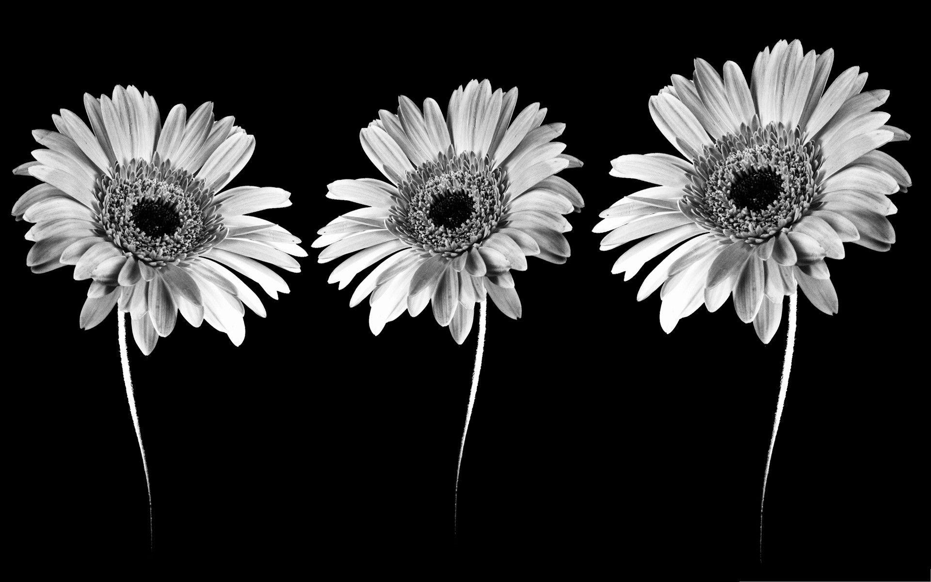 Black and White Flower Wallpapers