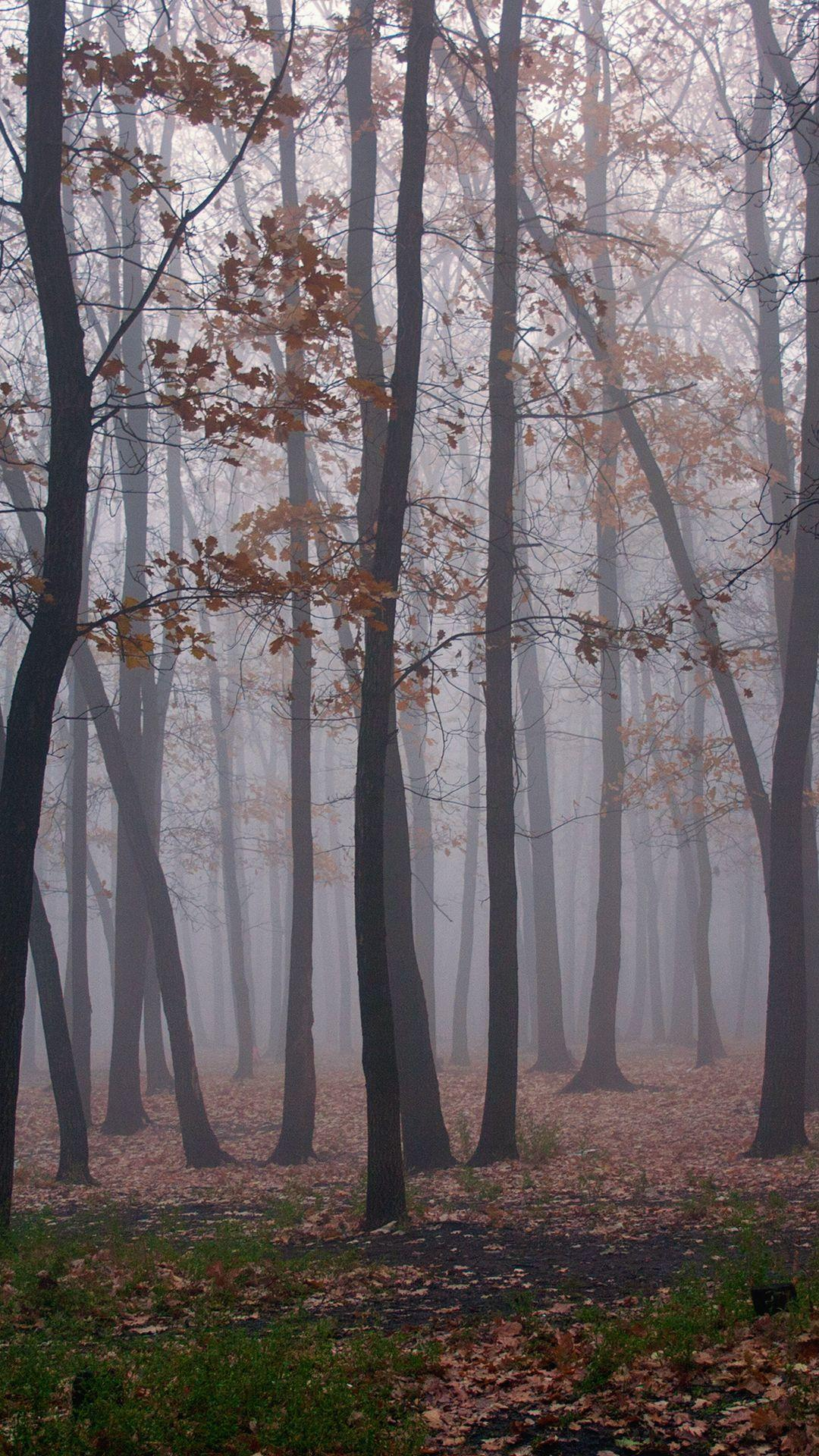 Foggy Forest Wallpapers - Wallpaper Cave