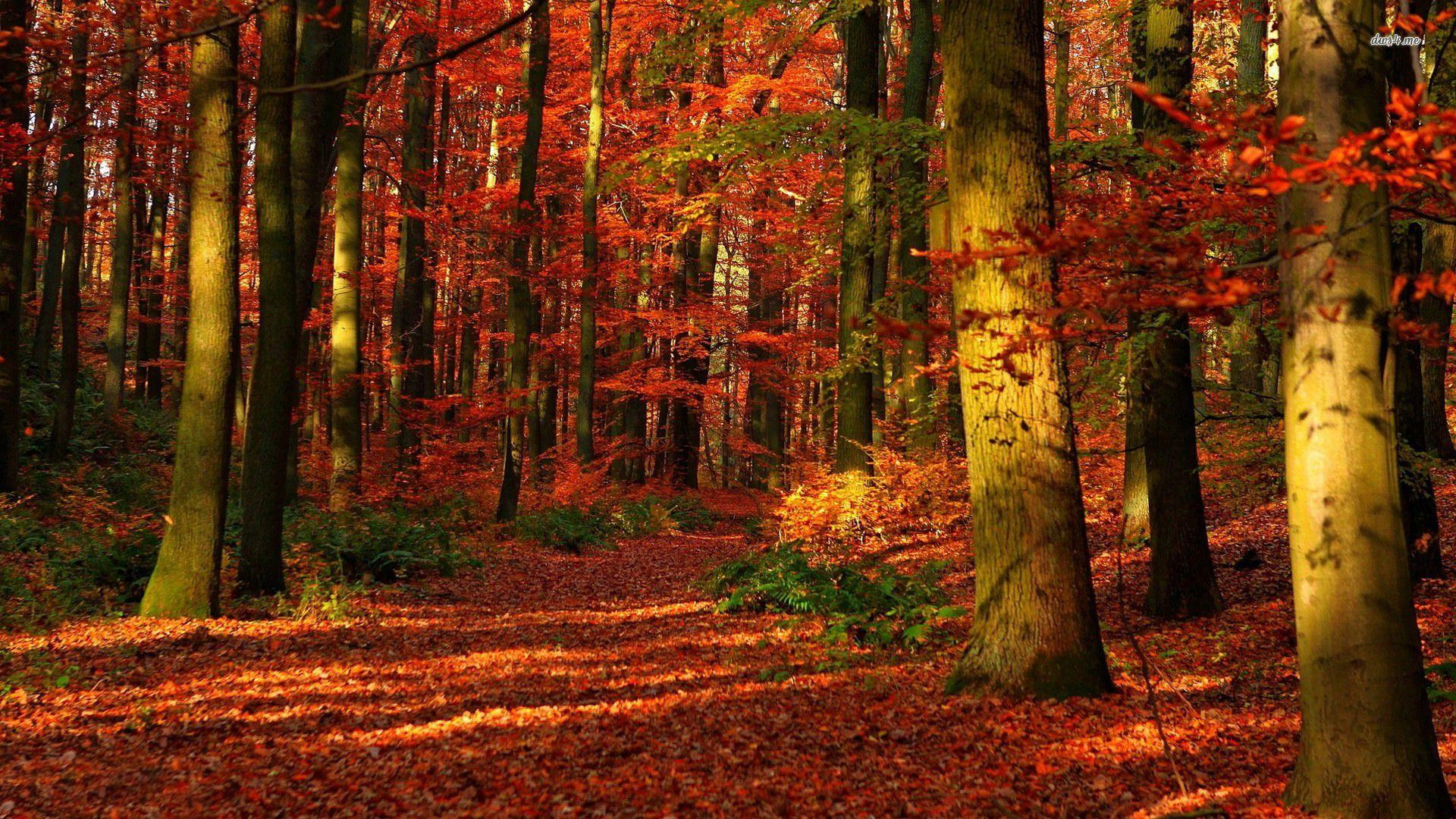Trees Beautiful Nature Autumn Red Forest Wallpapers For Iphone