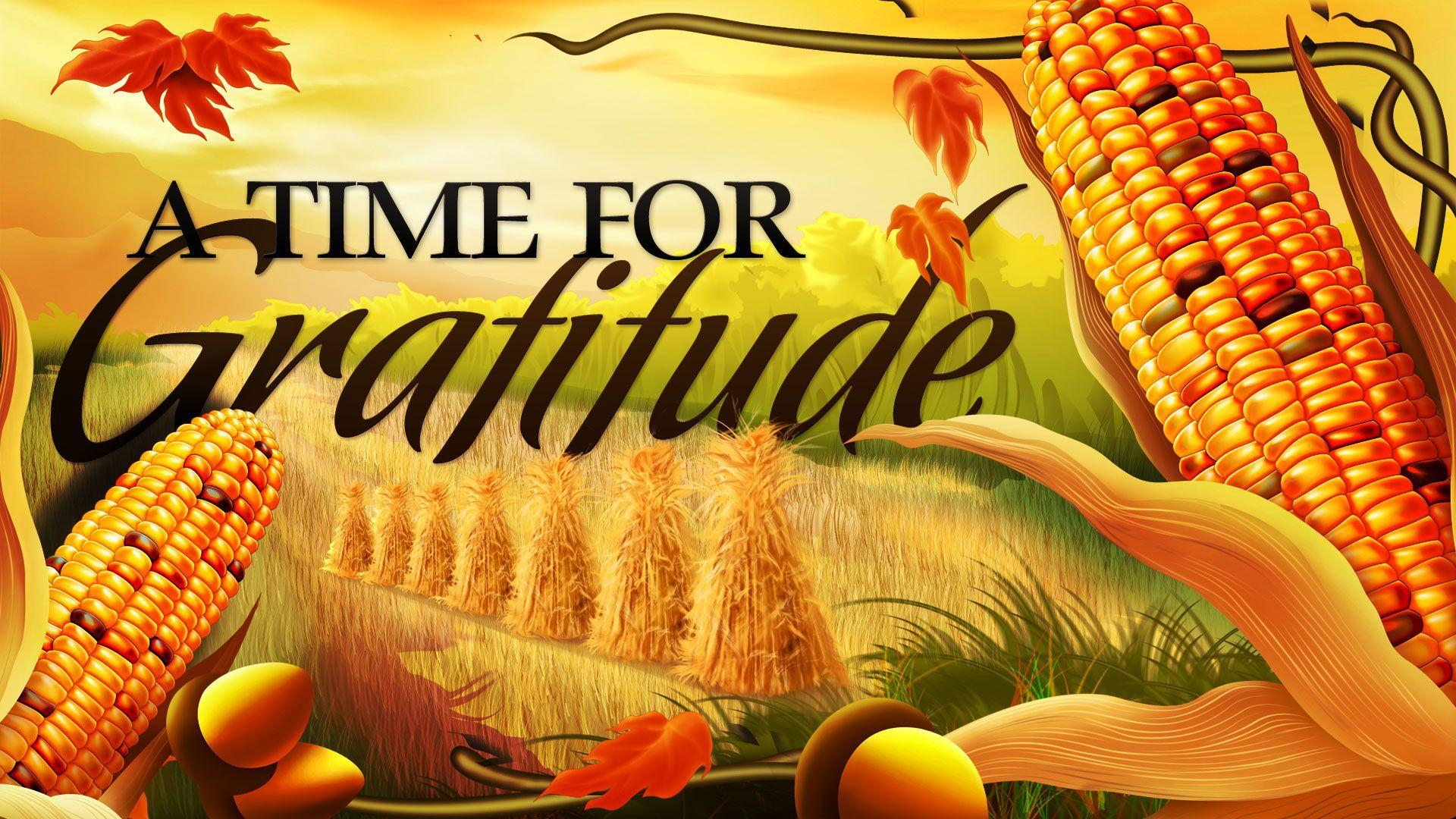Happy Thanksgiving Day Gratitude Food Corn Latest Hd Wallpapers