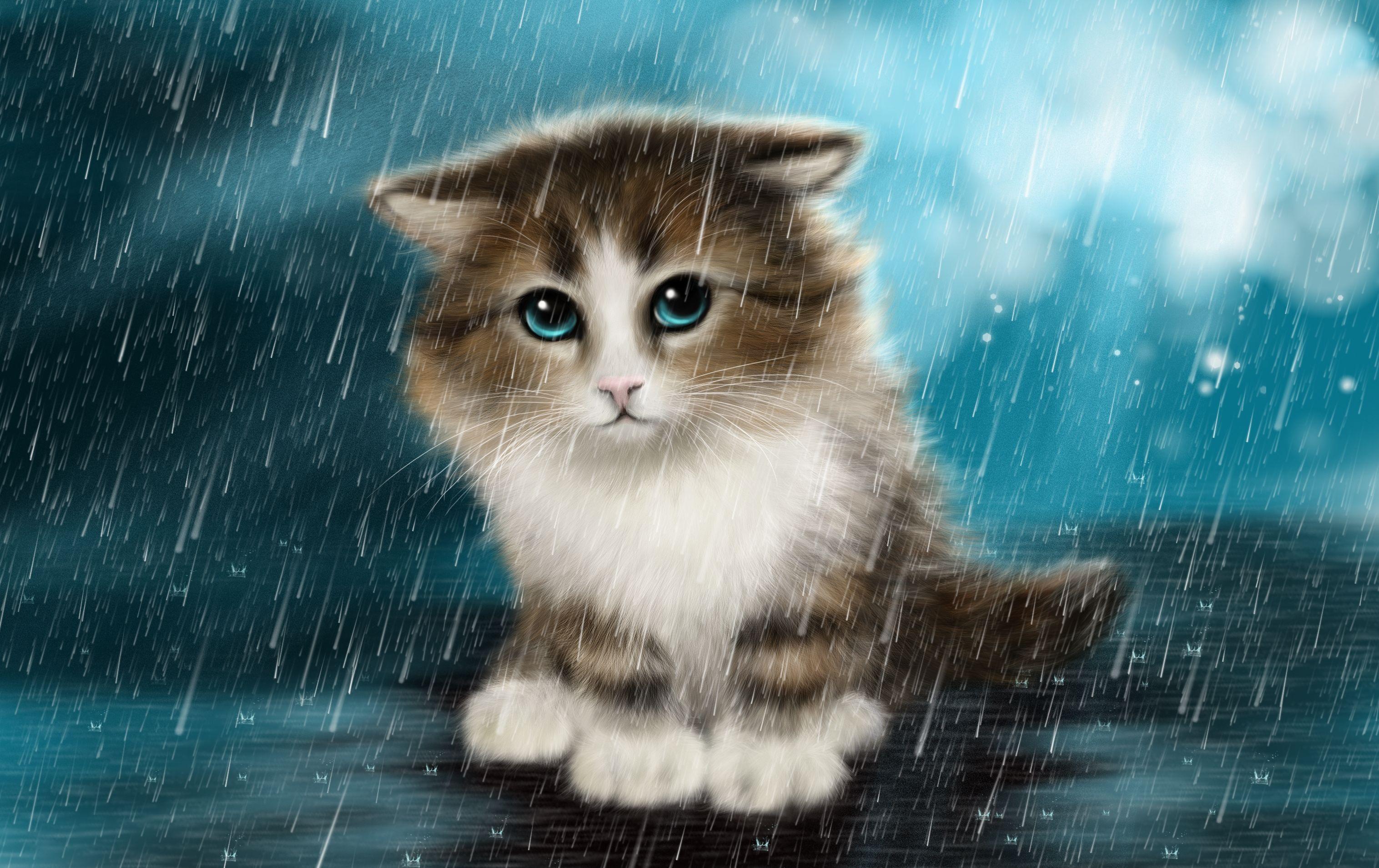 imágenes de gatitos tristes - Wallpapers Cute, Cat, Innocent, Animals,