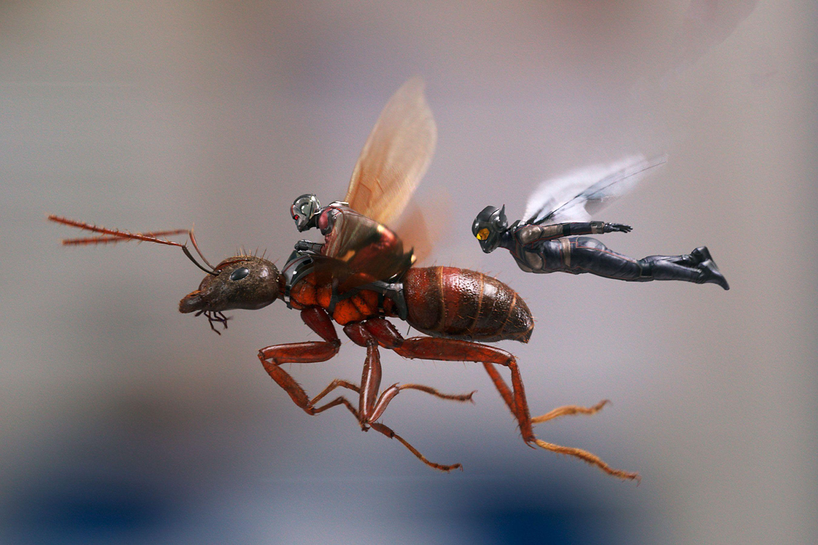 Ant Man And The Wasp, HD Movies, 4k Wallpapers, Image, Backgrounds