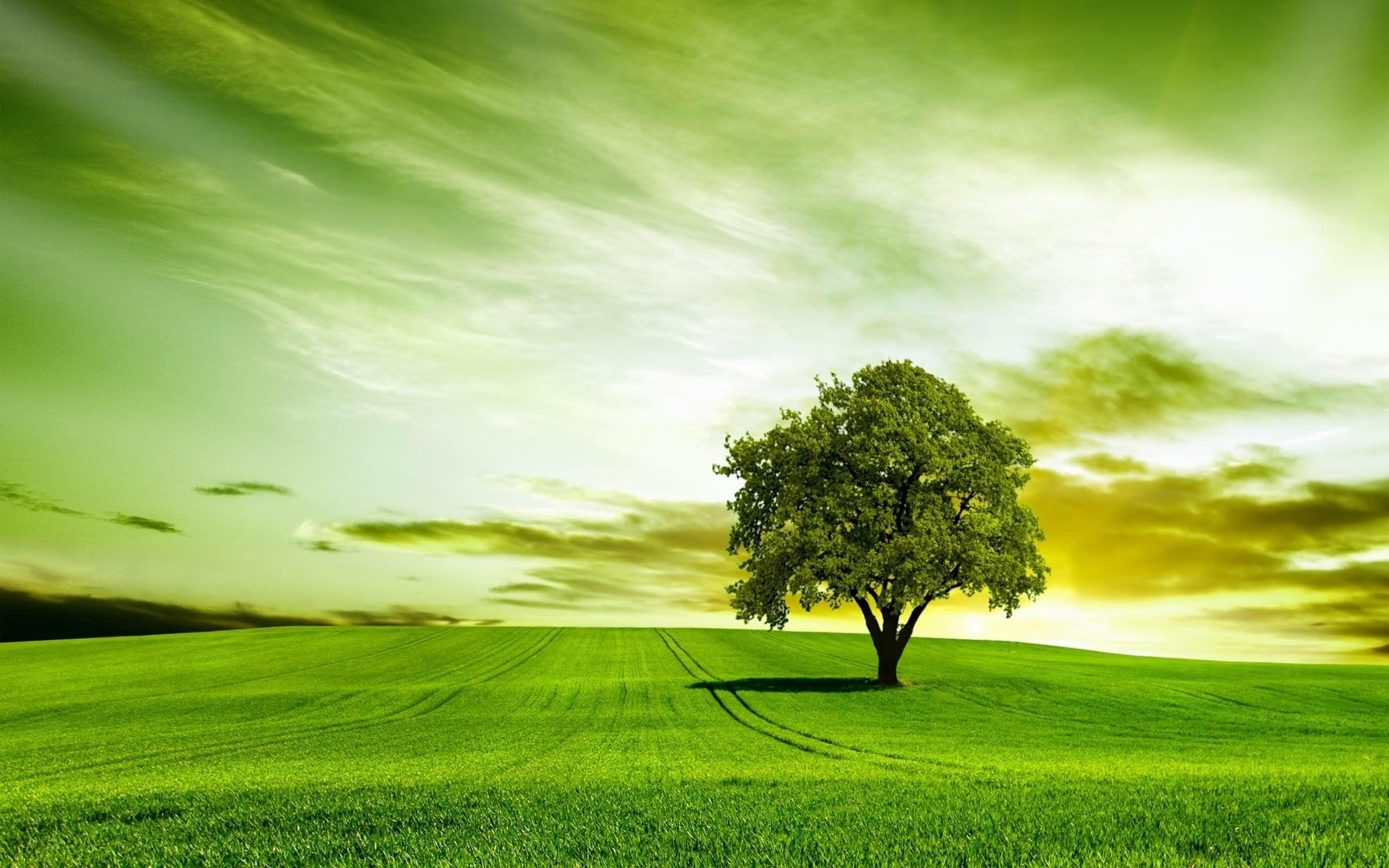 Green Tree Wallpapers Wallpaper Cave