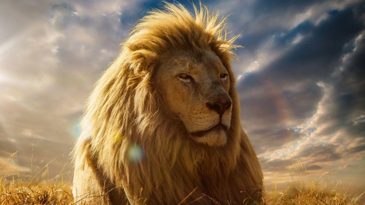 Wallpapers Lion King, 4K, Movies,