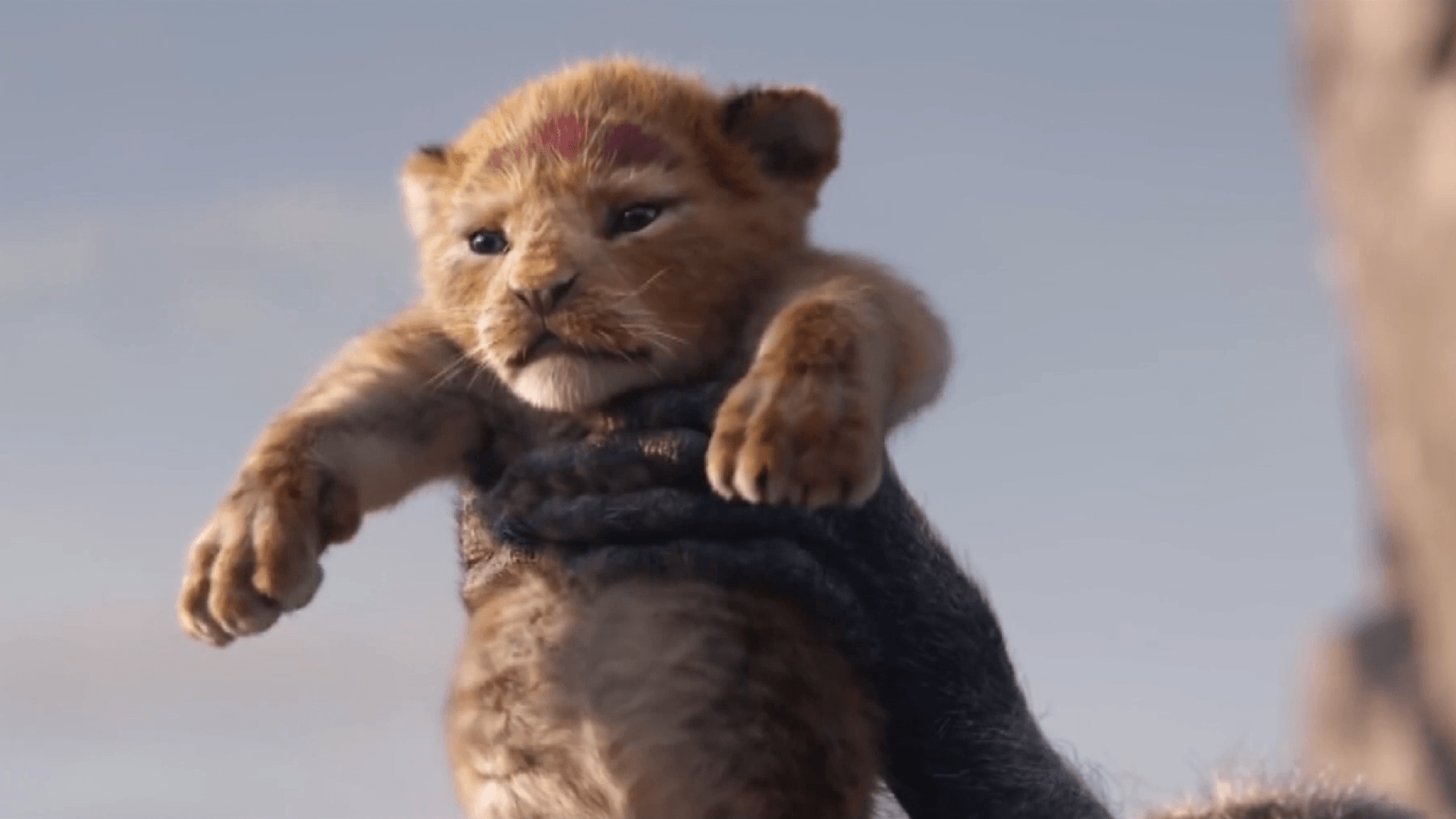 Lion King 2019 Wallpapers Wallpaper Cave