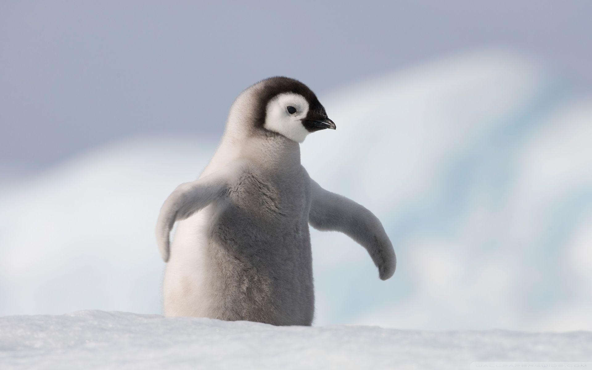 WallpapersWide.com | Antarctica HD Desktop Wallpapers for ...