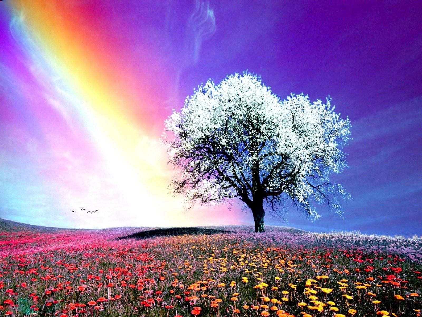 Natural Rainbow HD Wallpapers - Wallpaper Cave