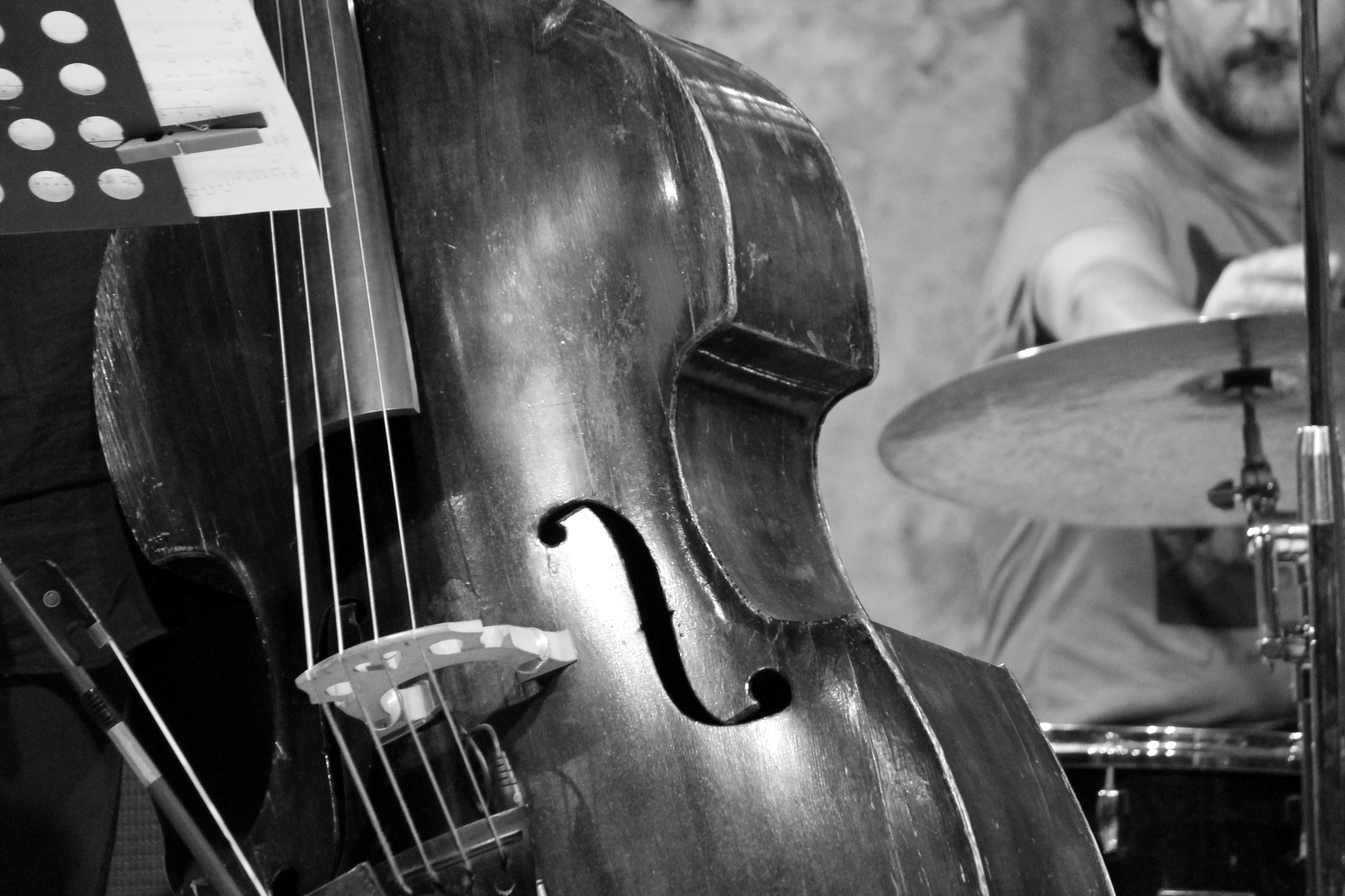 brown double bass free image