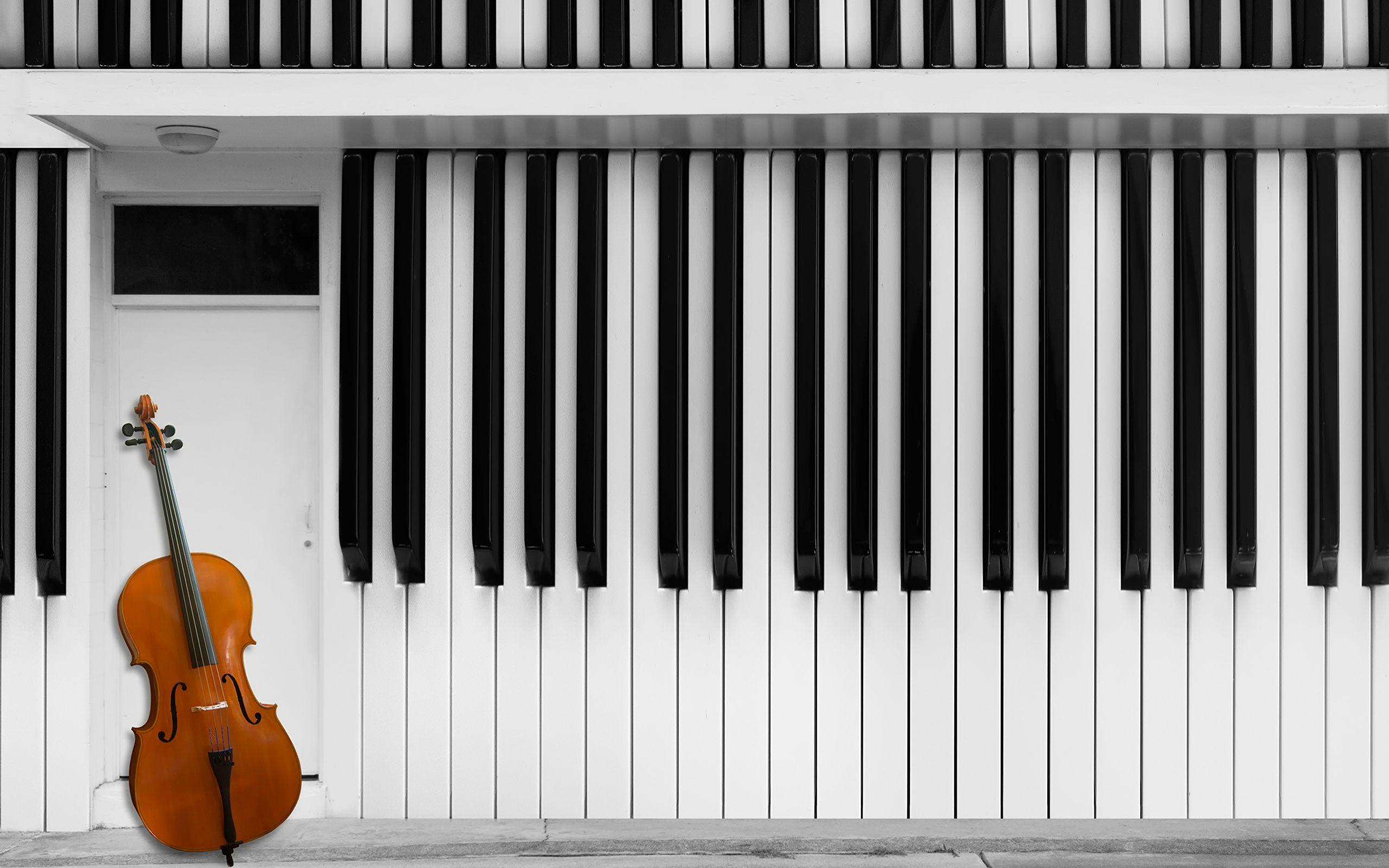 Pictures Double bass Musical Instruments 2560x1600
