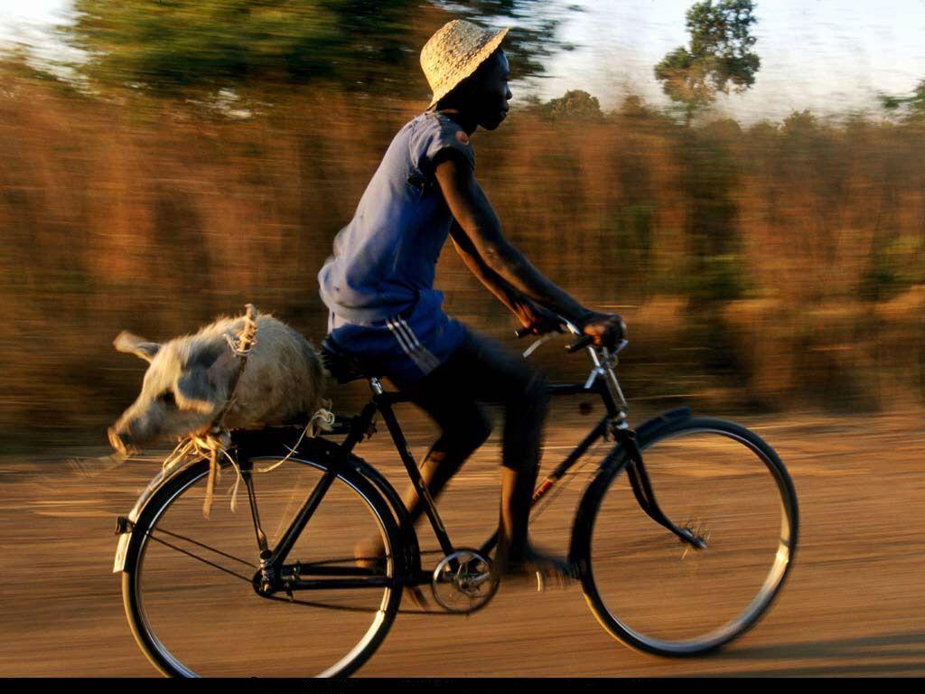 Езда на велосипеде смешные картинки, бумаги класс