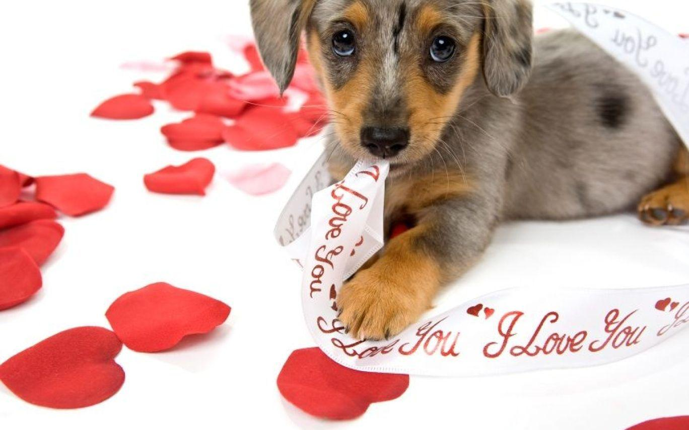 Funny Animal Valentine Wallpaper | Hot Trending Now