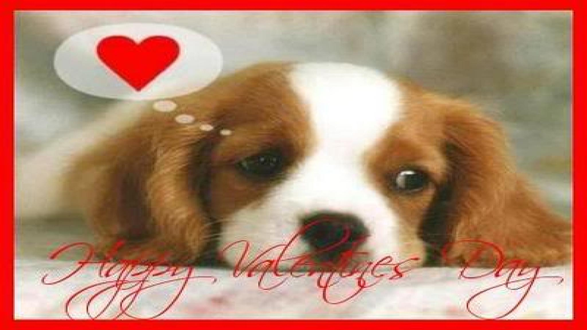 JP3CI2R Valentine's Day Puppies Free Wallpaper 400x305 - Picserio.com