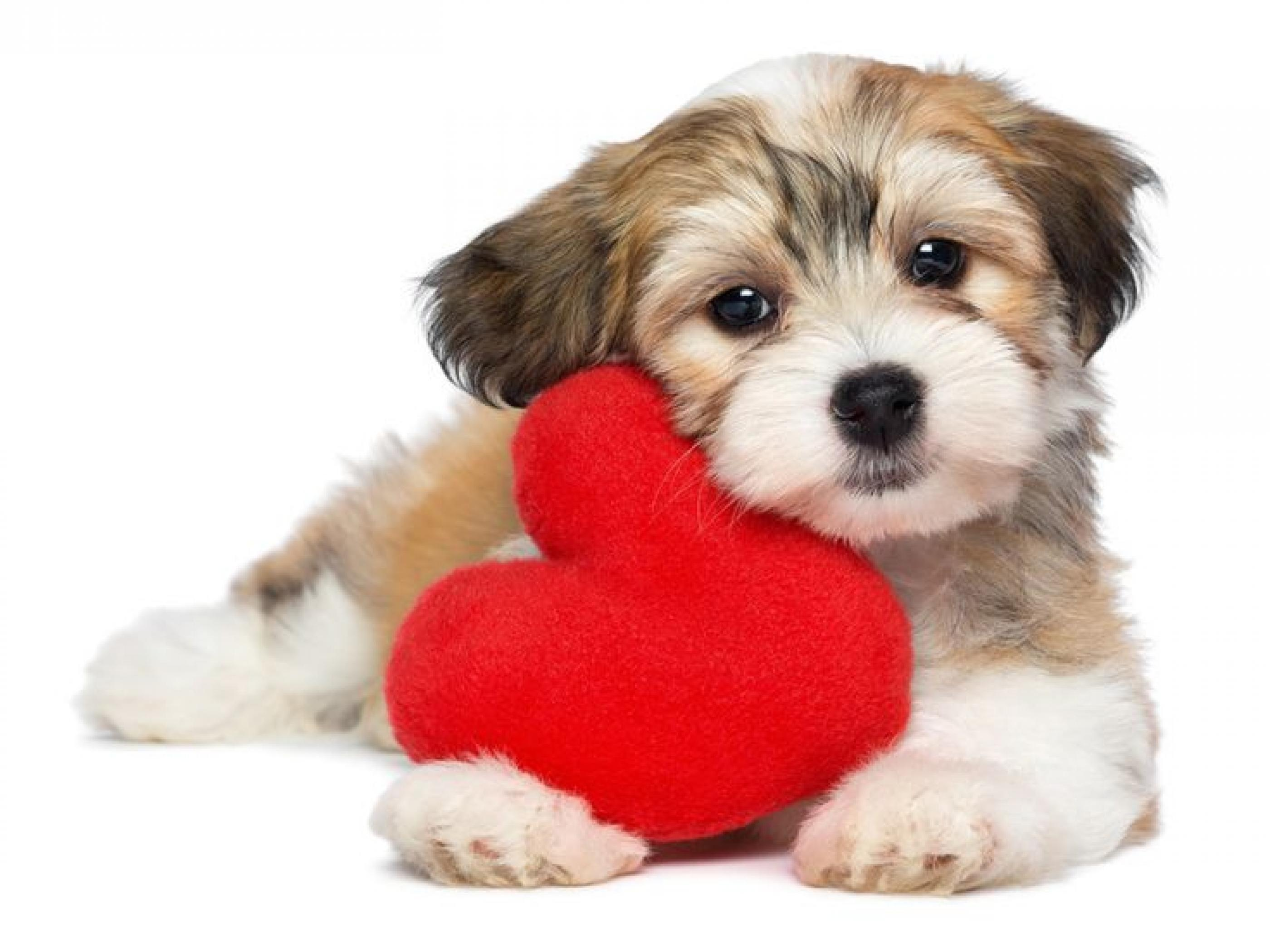 Valentines Day Dog Wallpaper - W.Impex | Wallimpex.com