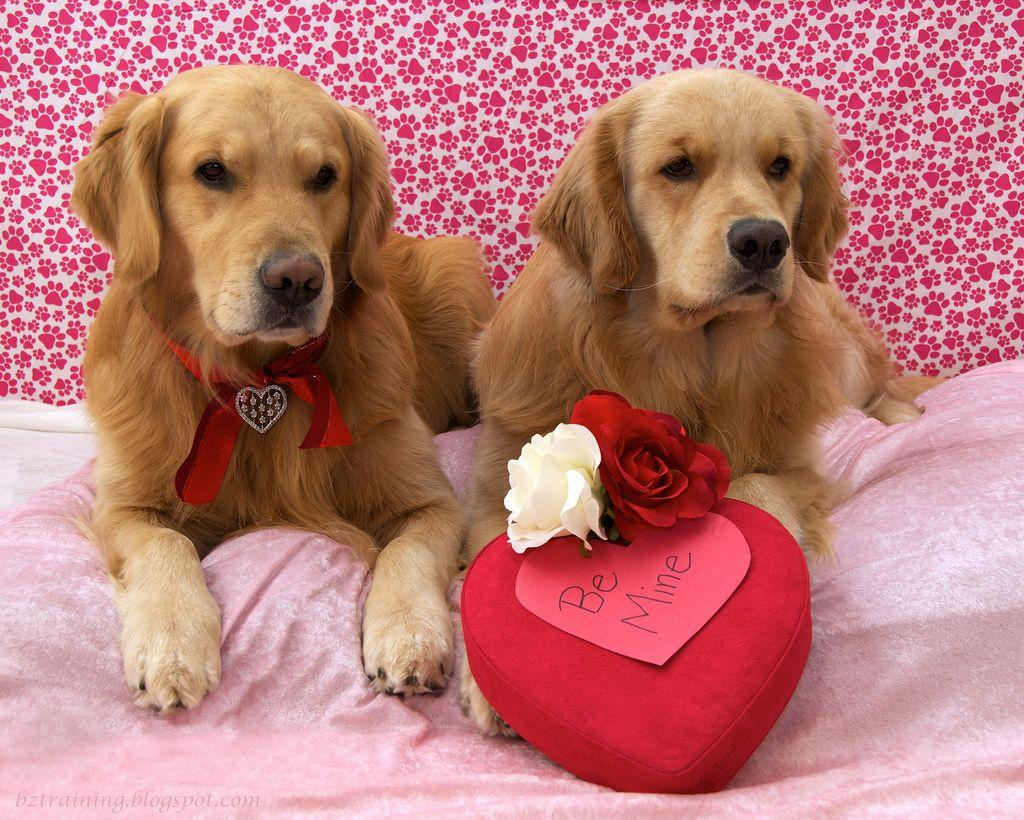 Cute Puppy Valentines Day Wallpaper | meinafrikanischemangotabletten