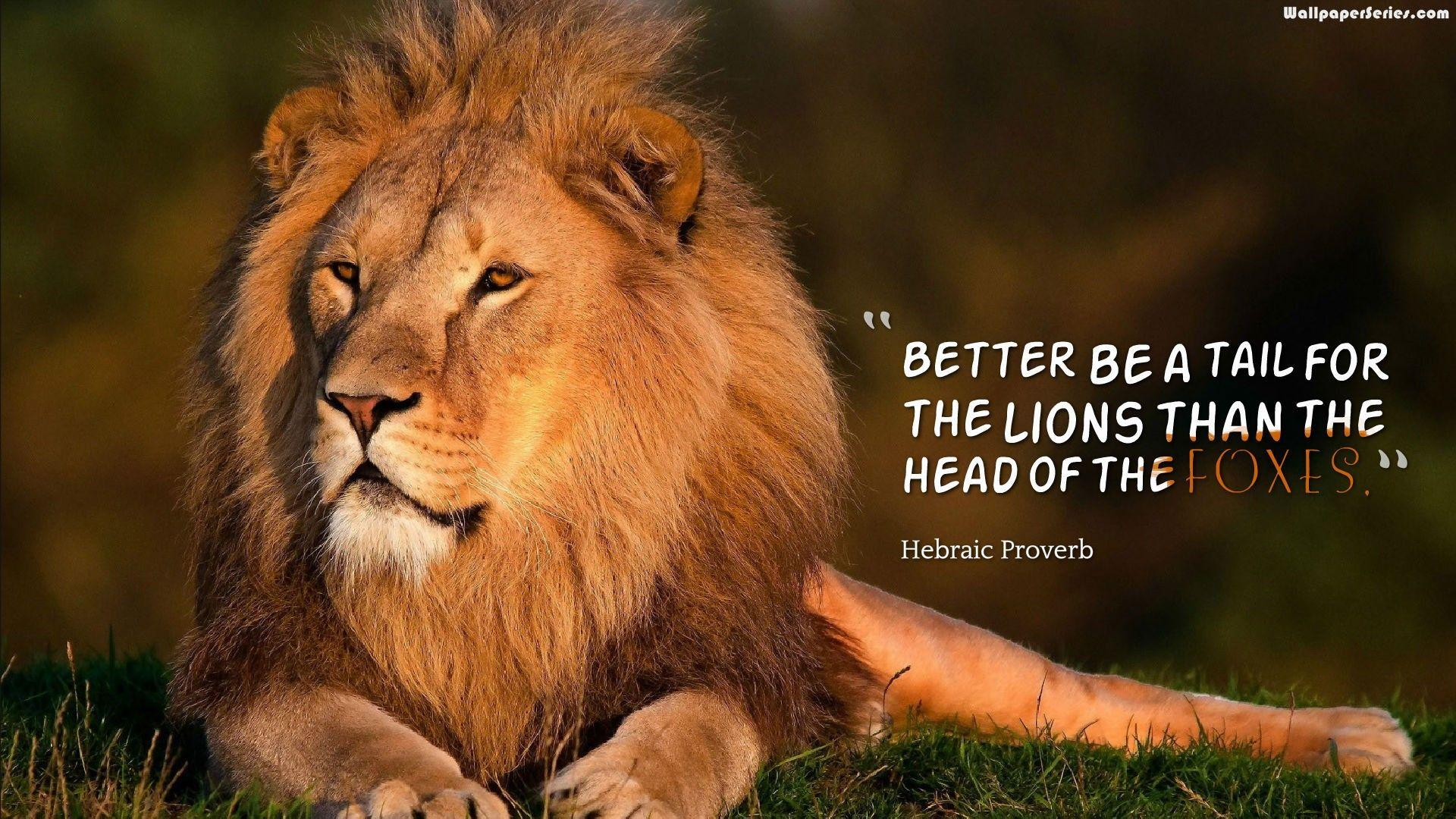 Lion Quotes Wallpapers - Wallpaper Cave