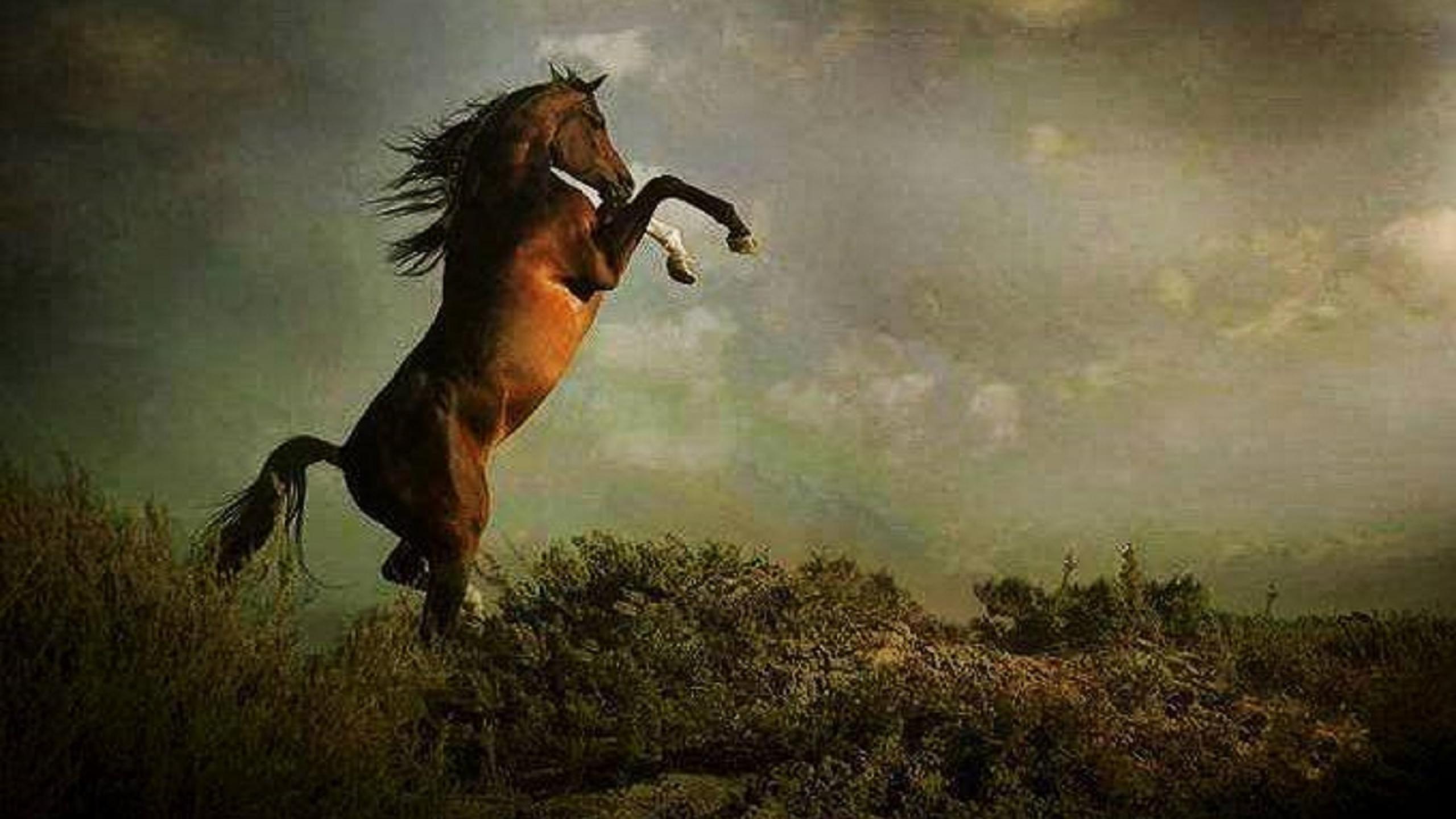 Horses Rearing Wallpapers Wallpaper Cave