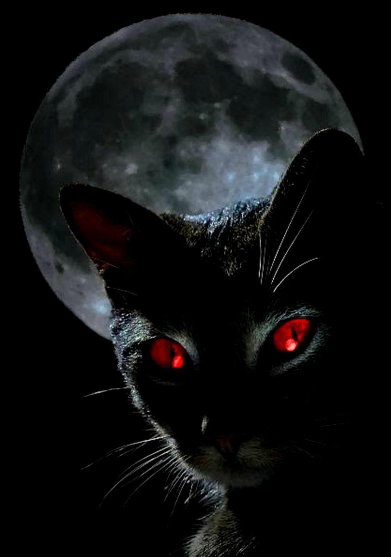 Black Cat Red Eyes Hd Wallpaper Hannahgracettcl